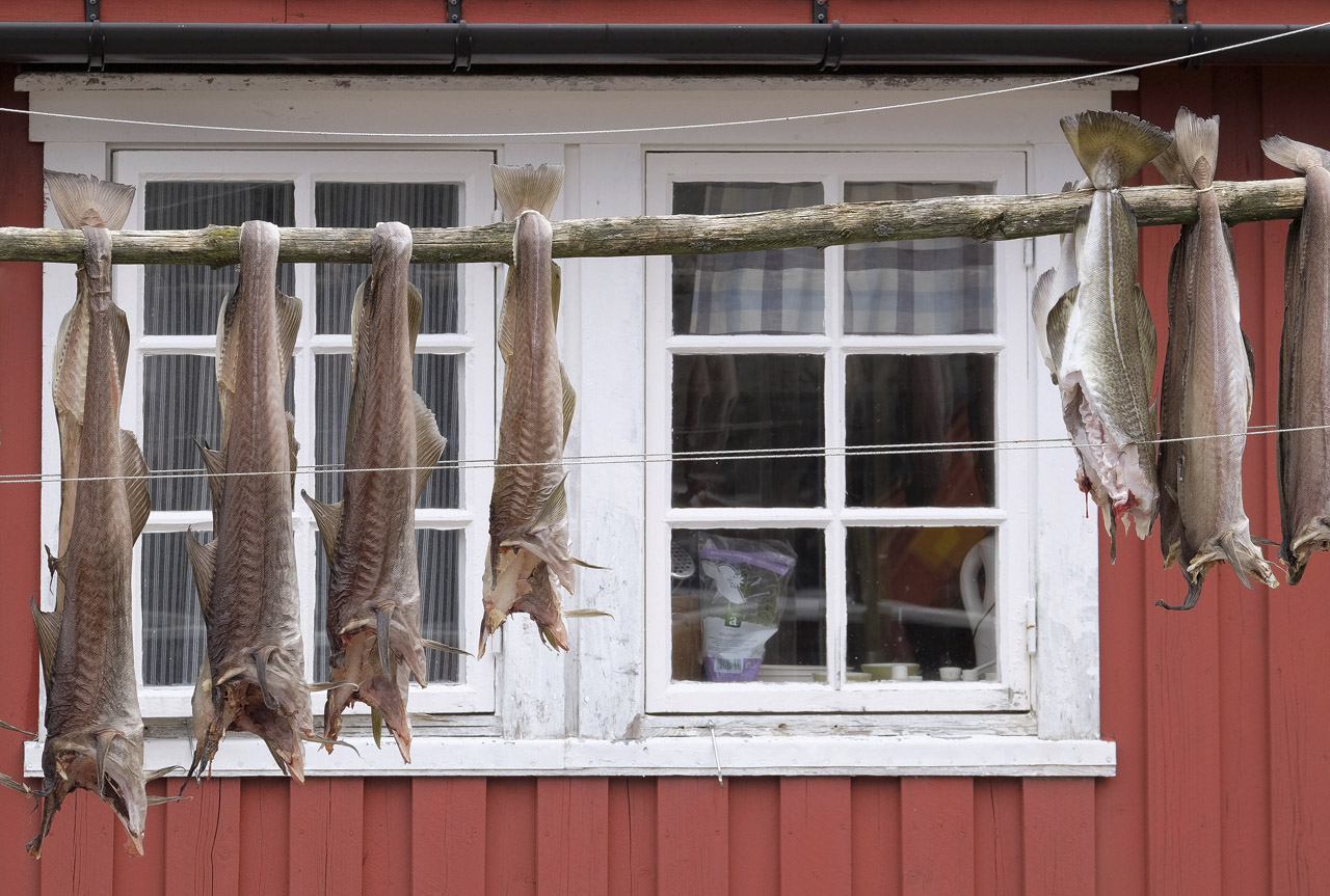 At the end of a single track spur road of some 10km or more is the quaint little fishing village of Nusfjord with its ochre fishing...