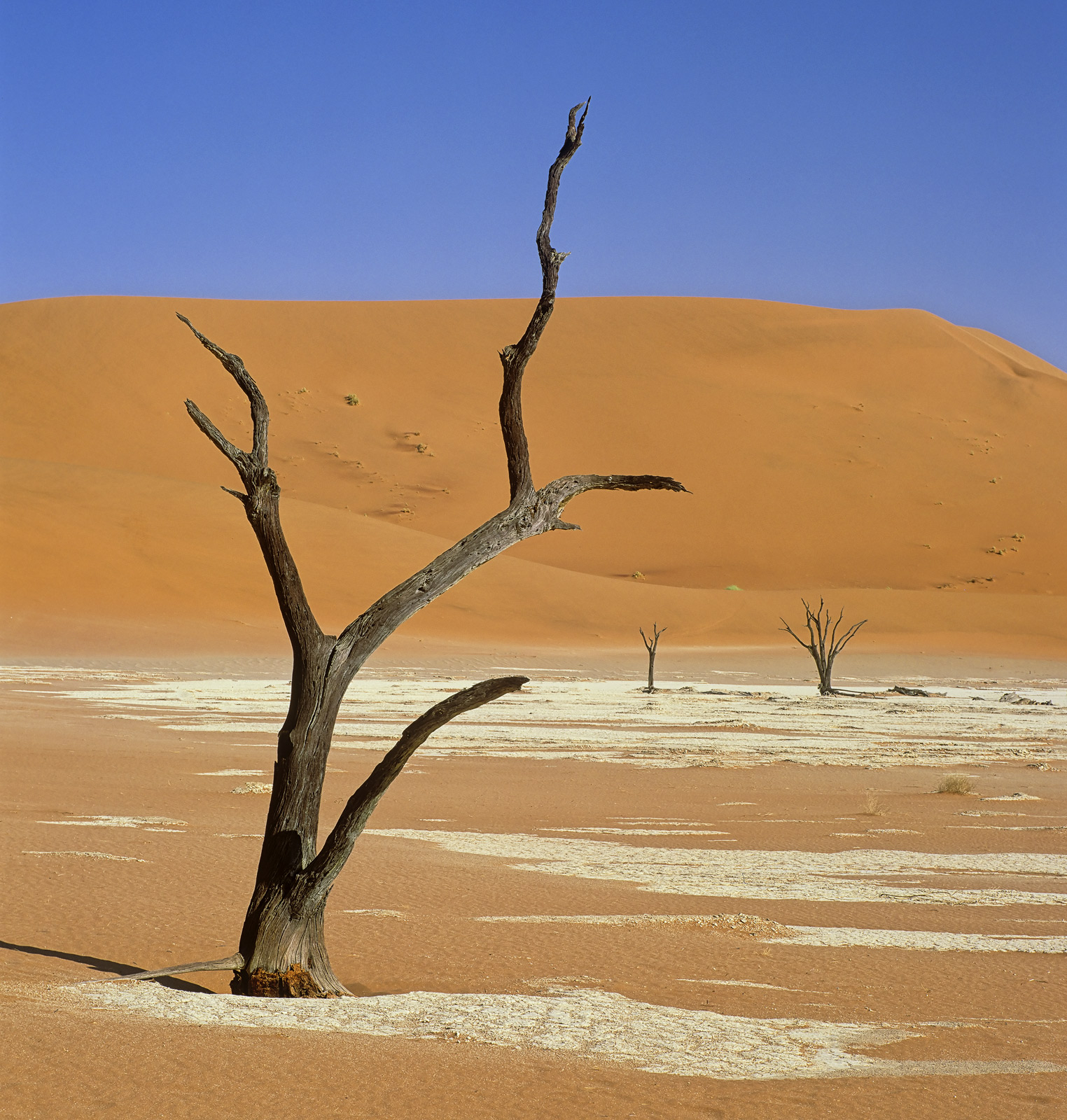 Long since deceased Camel thorn trees sprout from the orange desert pans ringed by ferrous dunes in one of the most bizarre landscapes...