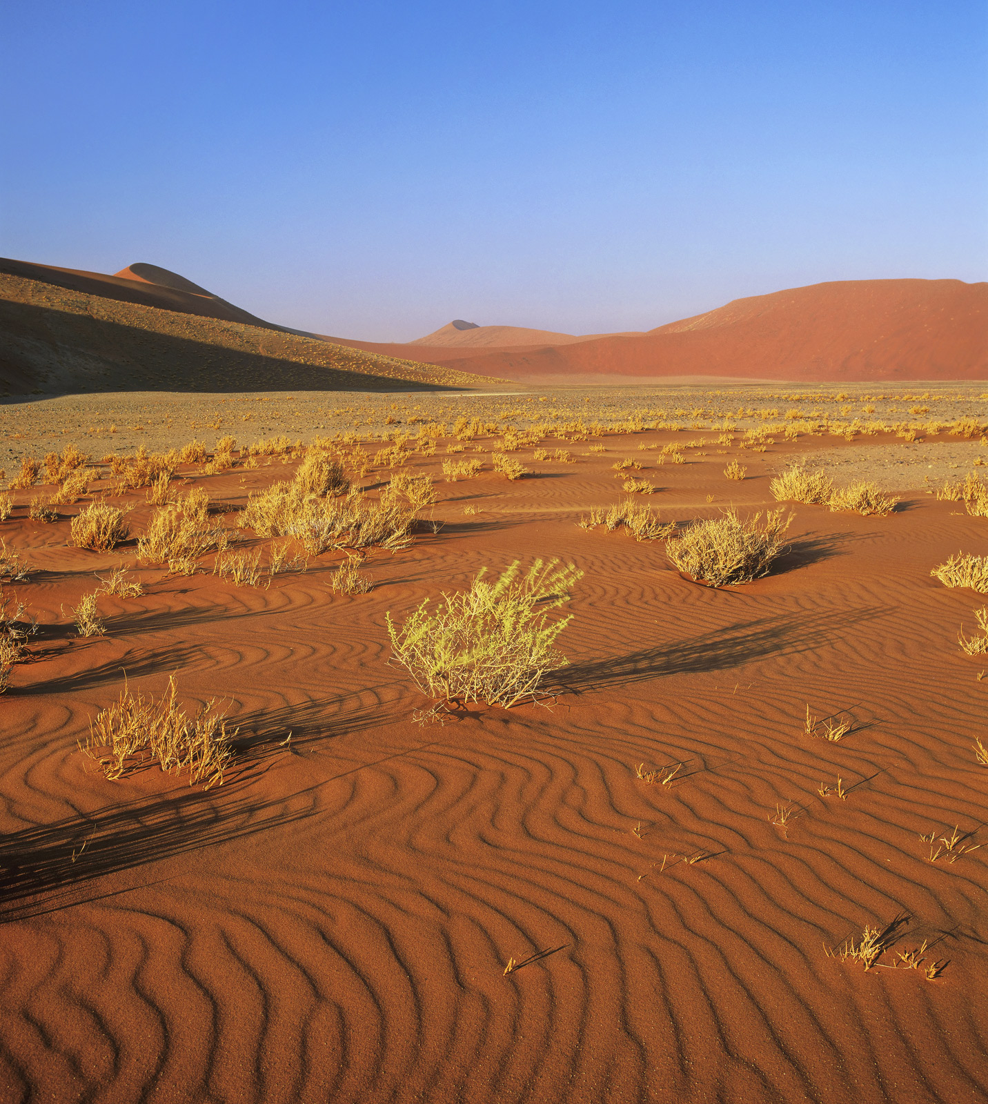 Shortly after sunrise is probably the best time to witness this surreal world of iron rich sand dunes and dessicated plants and...