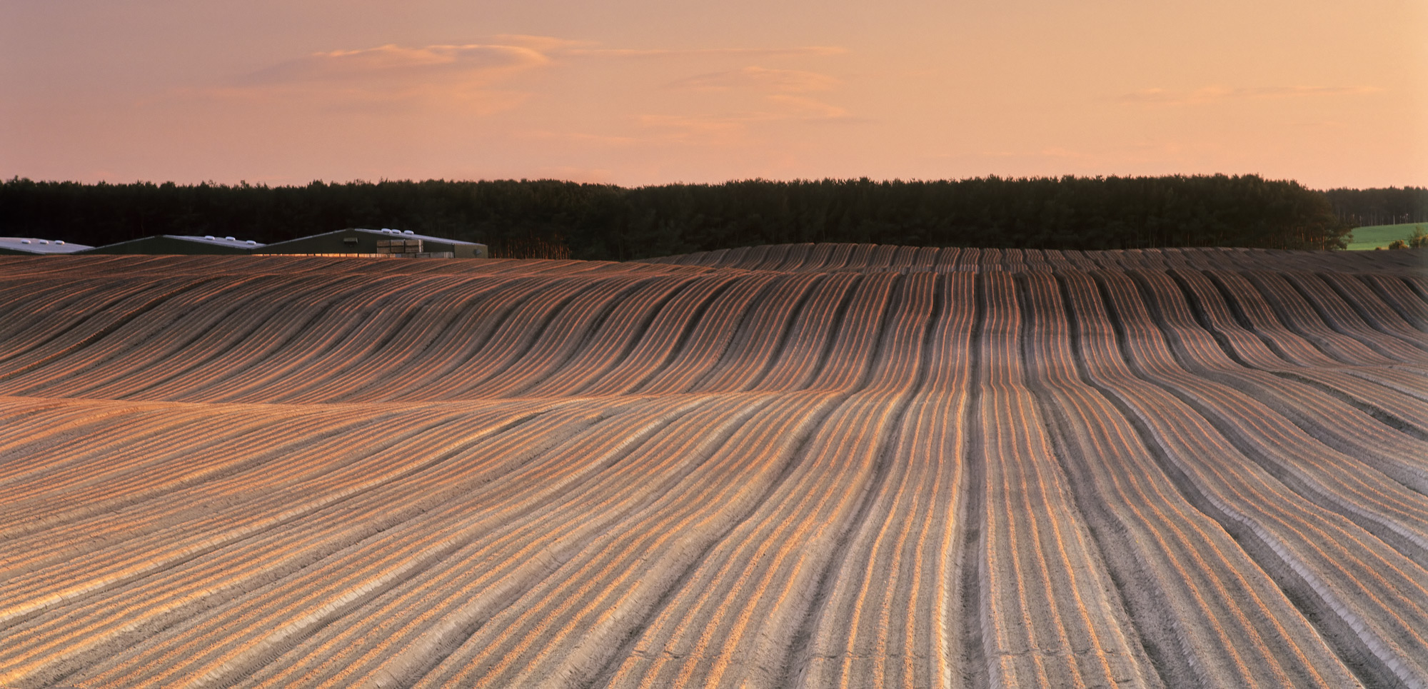 Extremely low raking winter sunlight defines the plough lines in a field close to the village of Roseisle and paints them with...