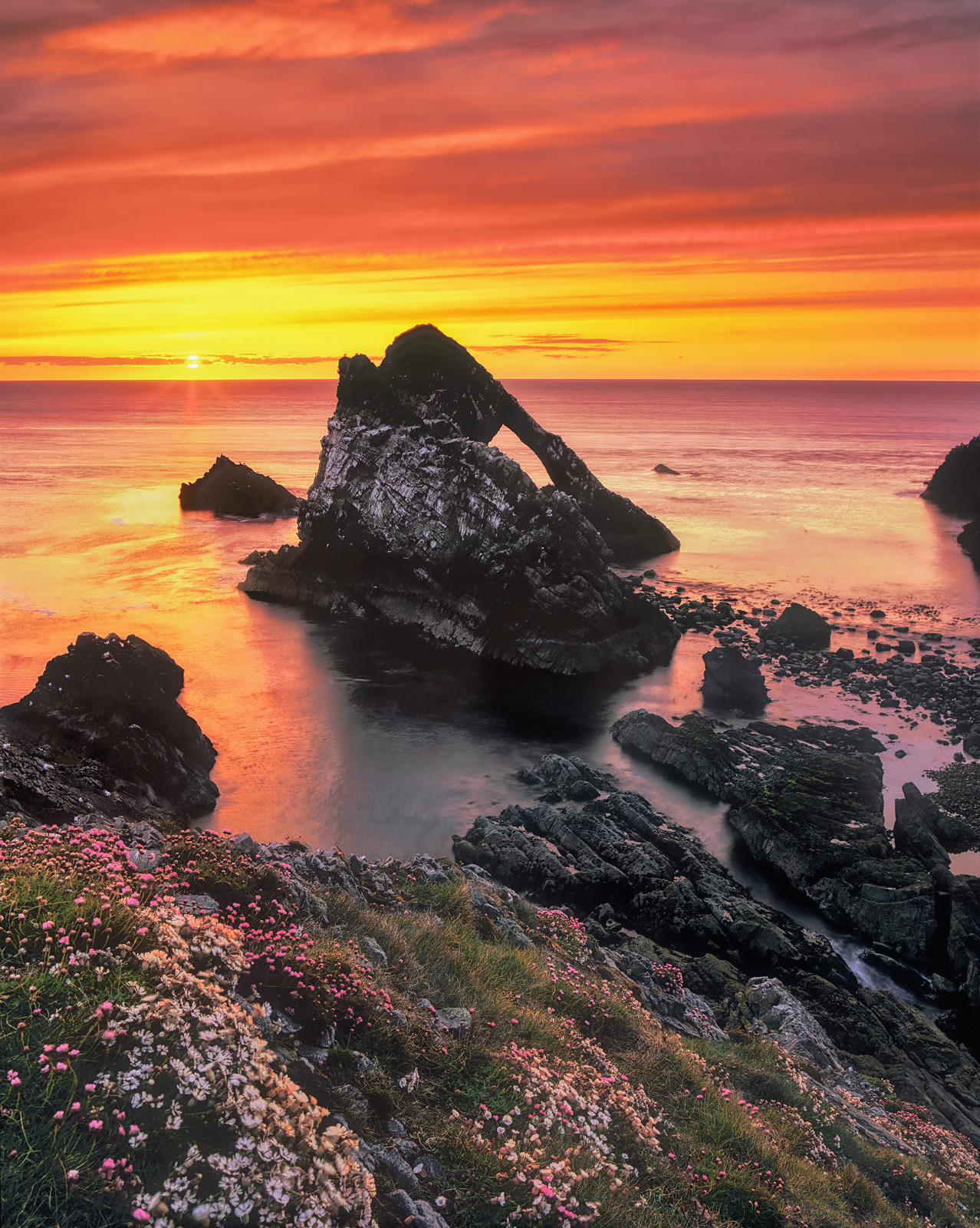 Sunrise at Bowfiddle rock during the summer months when most of the cliff top flowers are blooming at Portknockie on the Moray coast.