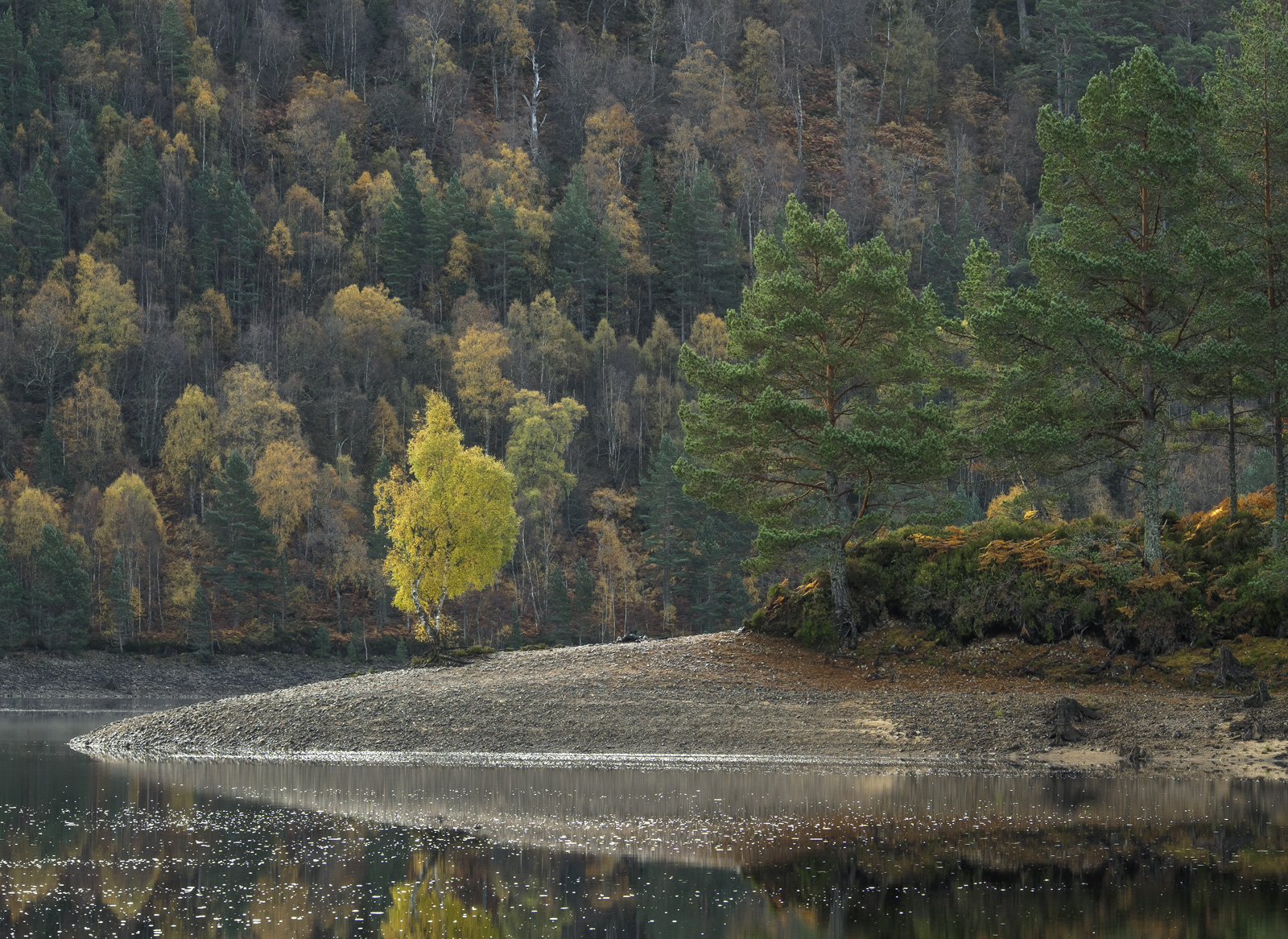 This island birch tree isolated at the end of a gravel spit is very well known in Glen Affric and pretty irresistible to photograph...