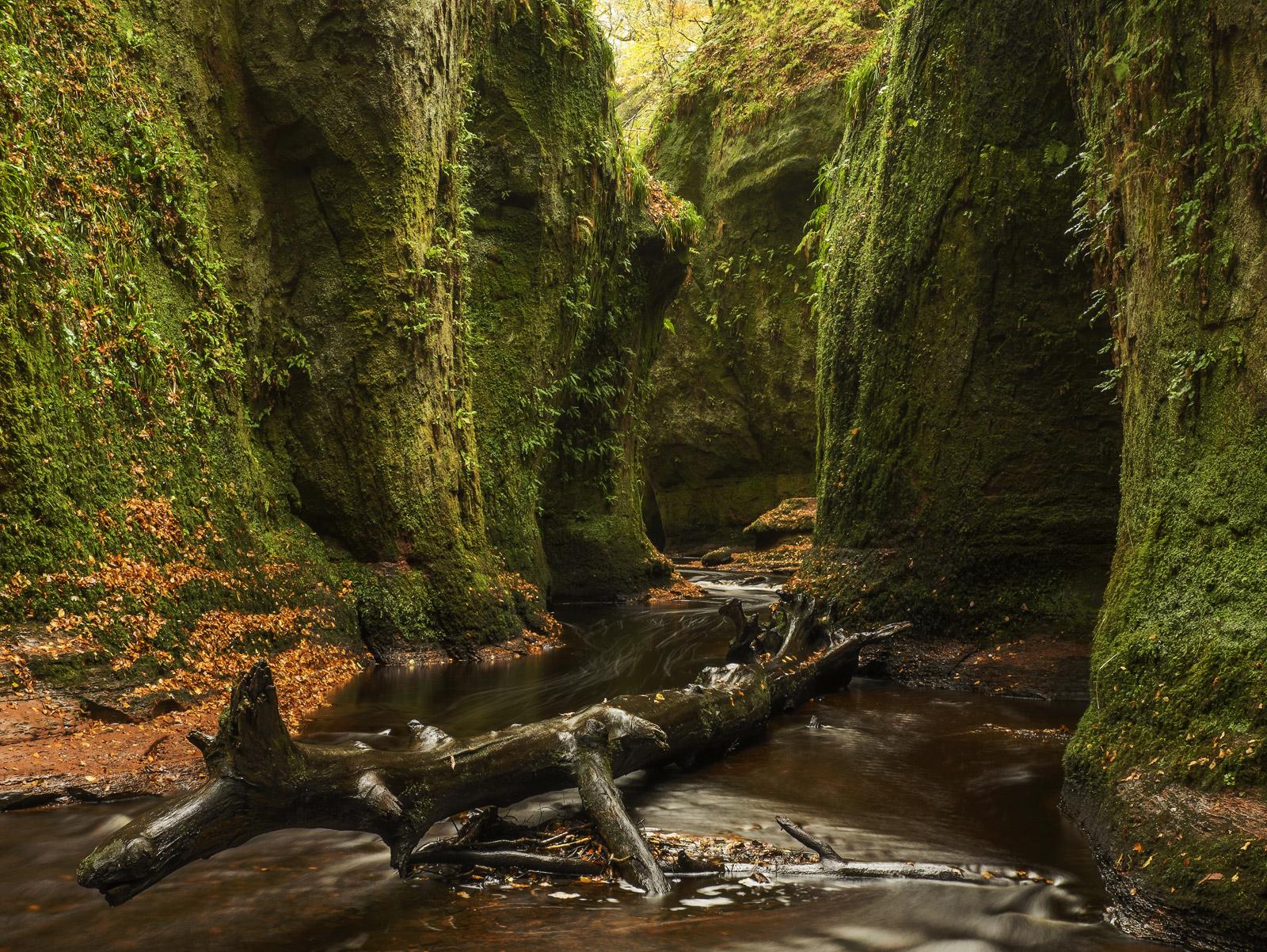 Primordial Soup, Finnichs Glen, Trossachs, Scotland, slime, belly, imagination, bloody, artery, river, peat, green, drap, photo