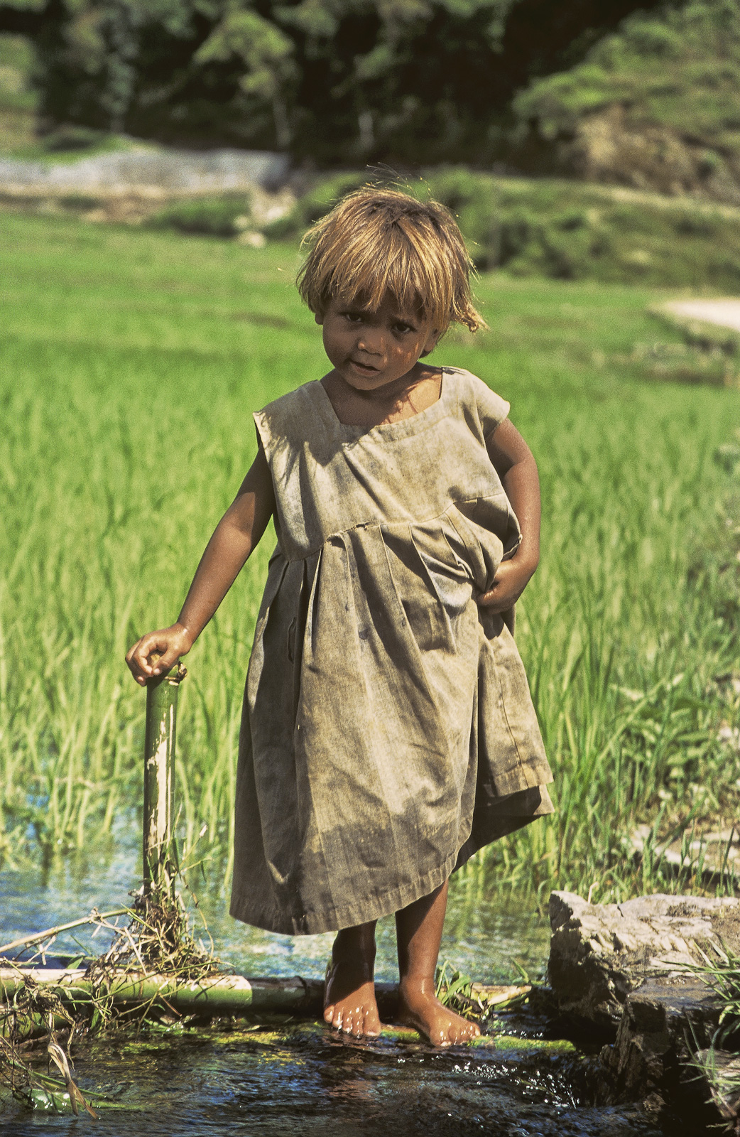 a liitle Nepalese girl of exquisite charm and beauty with perfect olive tanned skin dressed in rags and playing next to the irrigation...