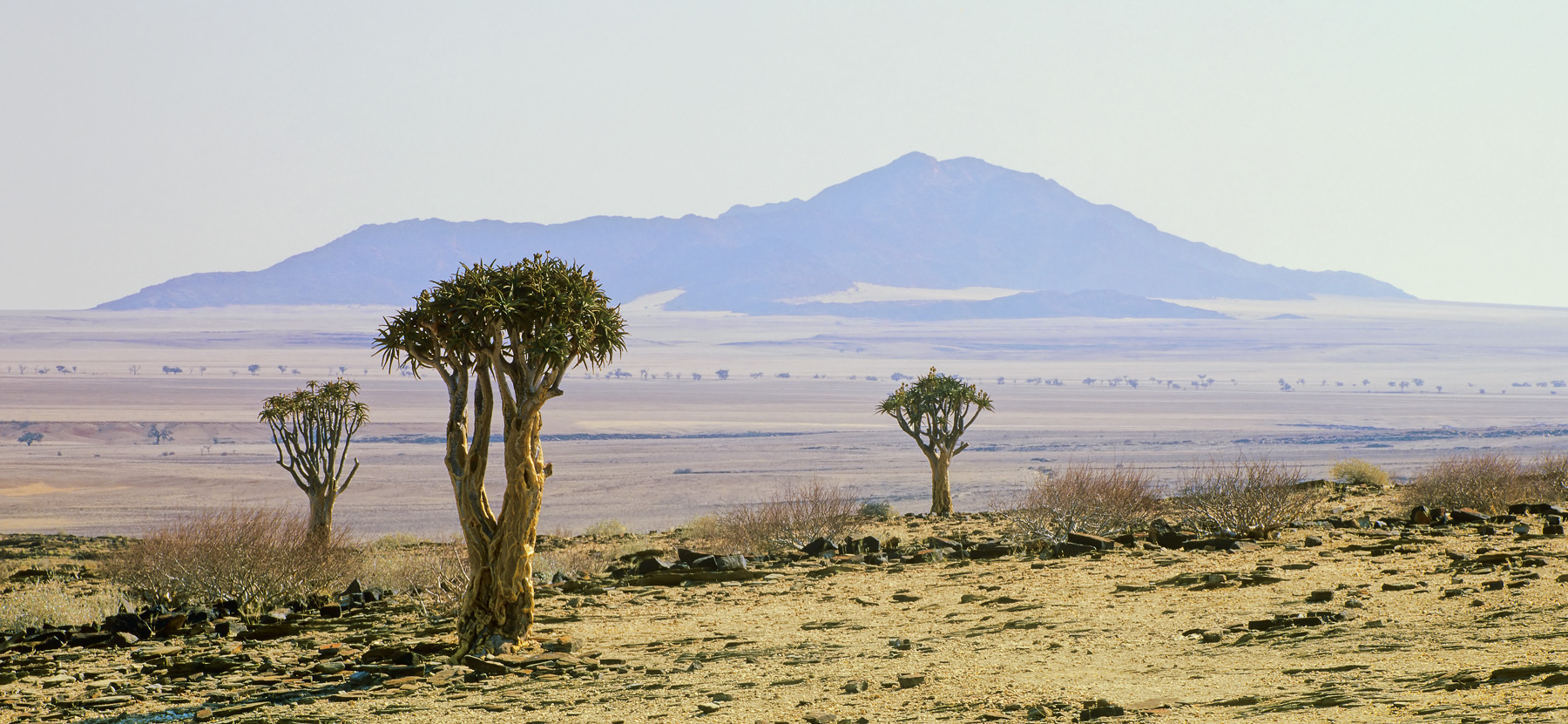 I had expressed an interest in obtaining a decent shot of some Quiver trees during our travels in Namibia when our driver claimed...
