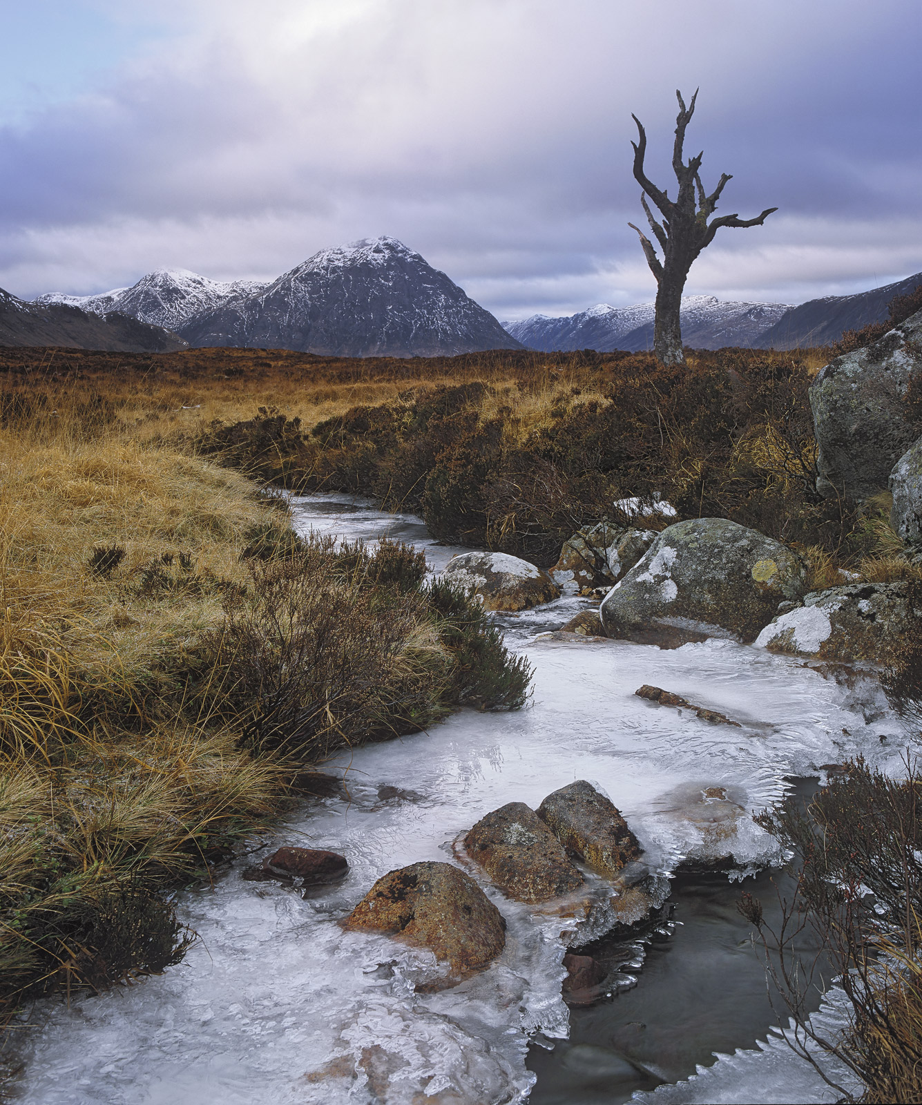 The old skeleton tree on Rannoch moor, at least survived the last spell of high winds that battered the area and destroyed the...