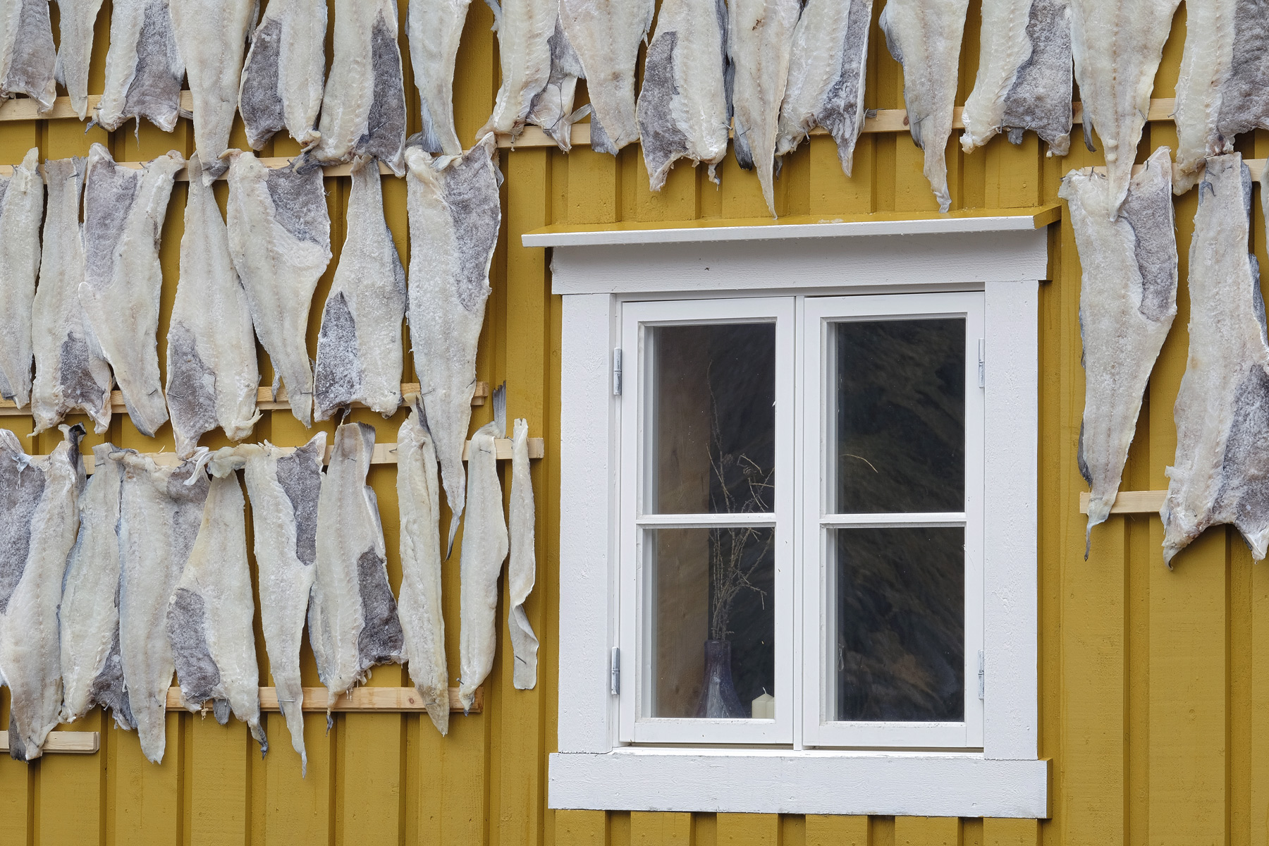 The Norwegians have so many waays to display their fish and these cod freshly salted and opened up butterfly fashion to dry were...