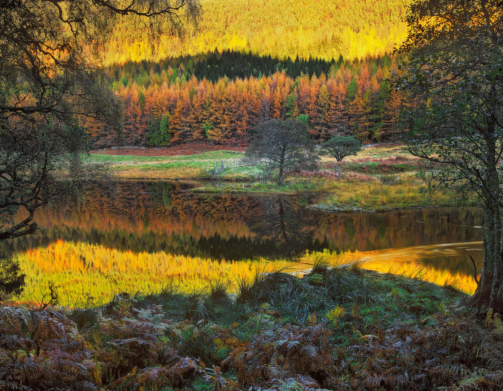 The foliage colour this autumn around the Glen Affric area was really quite stunning, none more so in fact than by the river...