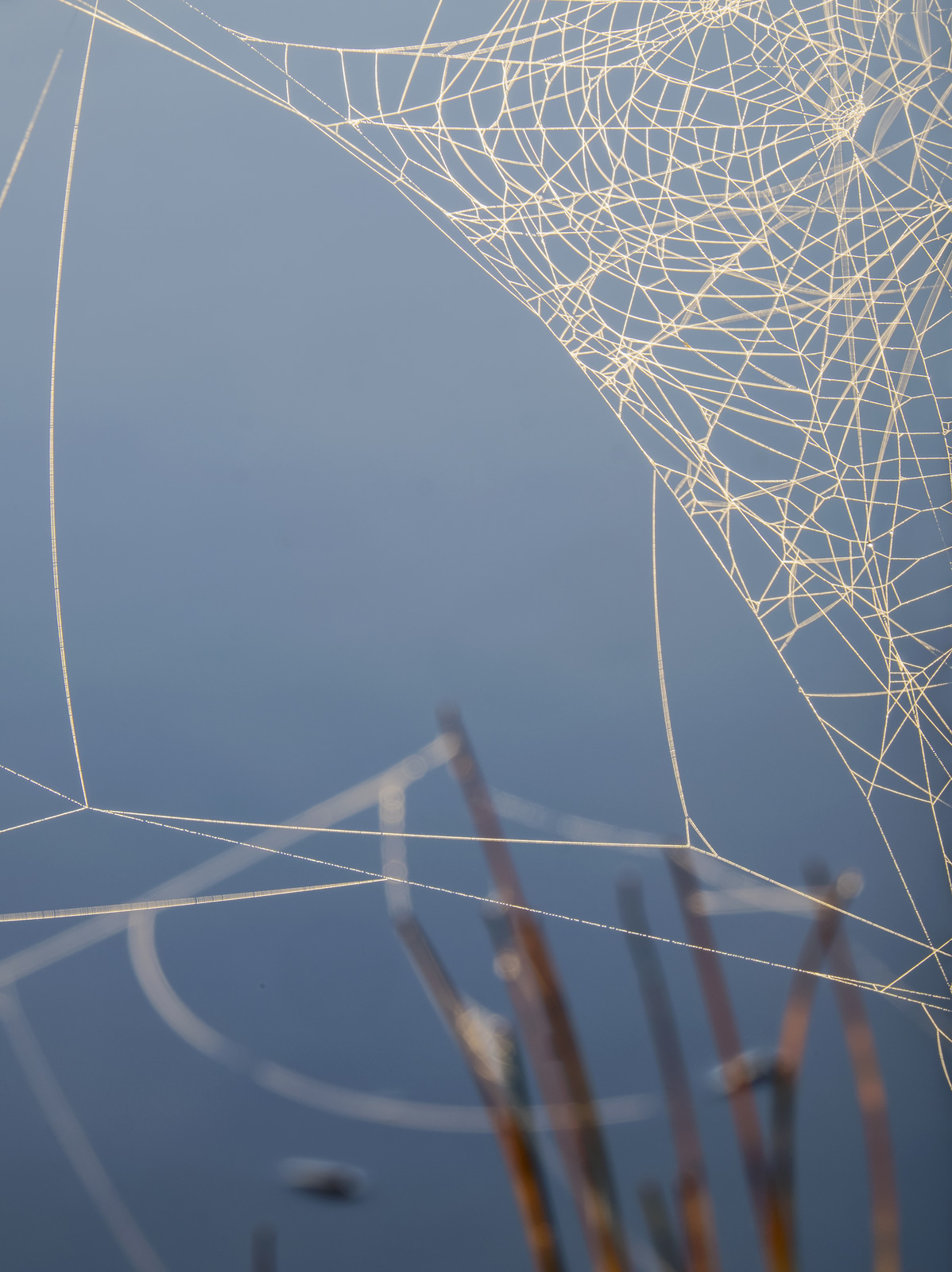Rusky Lacework, Loch Rusky, Trossachs, Scotland, morning, autumn, magical, embroidered, strung, dew, frozen, mist, cobwe, photo