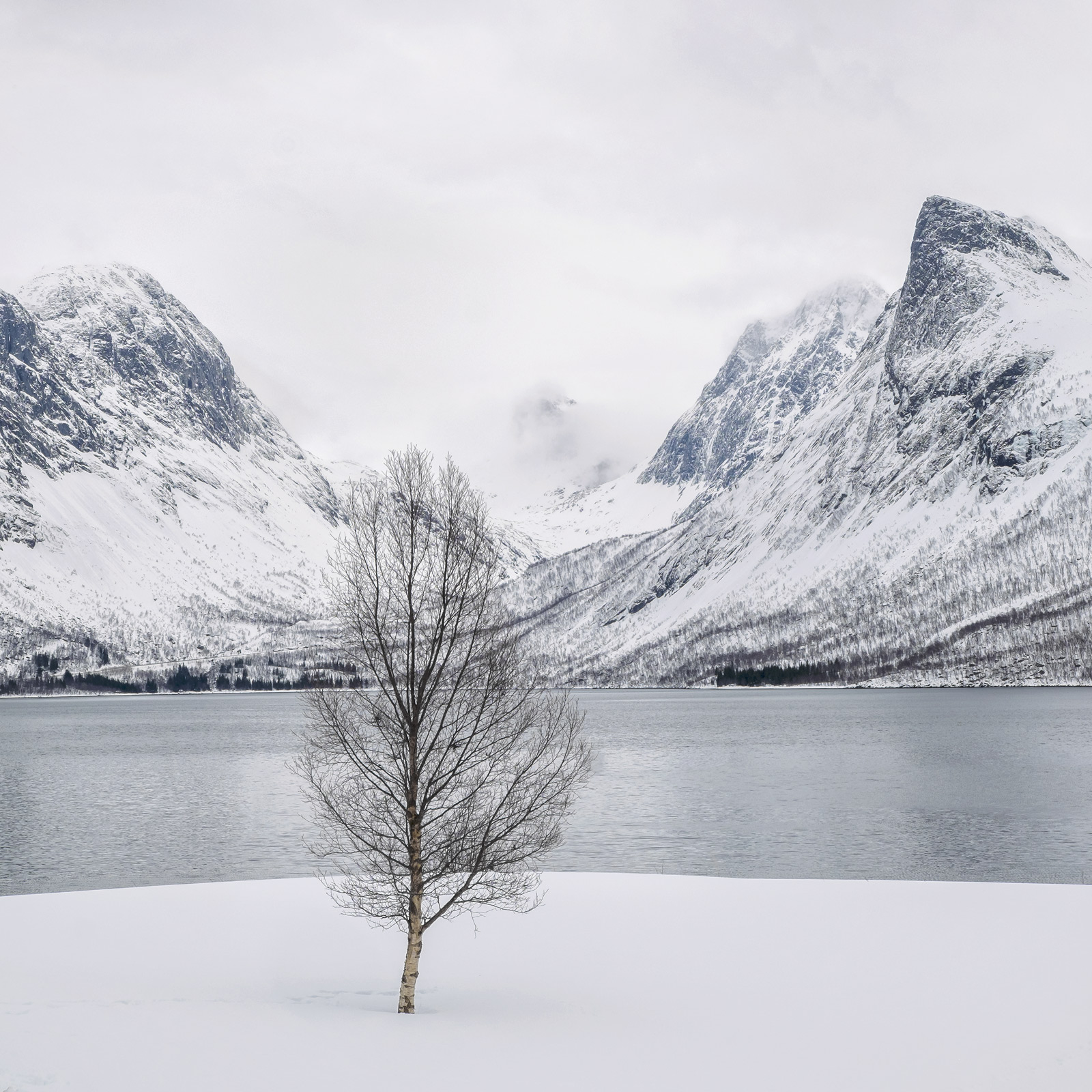 Senja Cube, Bergsbotn, Senja, Norway, favourites, magnificent, rugged, mountains, blasted, delicate, birch, fragility, l, photo