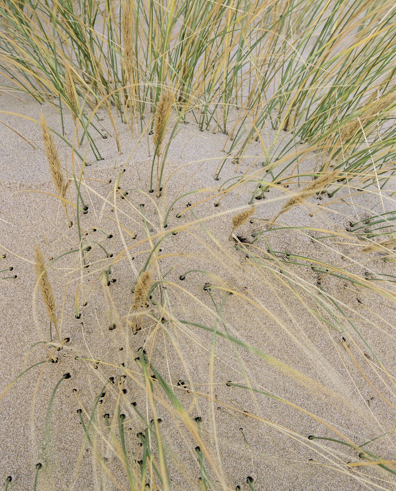 The wind had been blowing for a couple of days so I was pretty certain that some of the sand beaches would be worth a visit after...