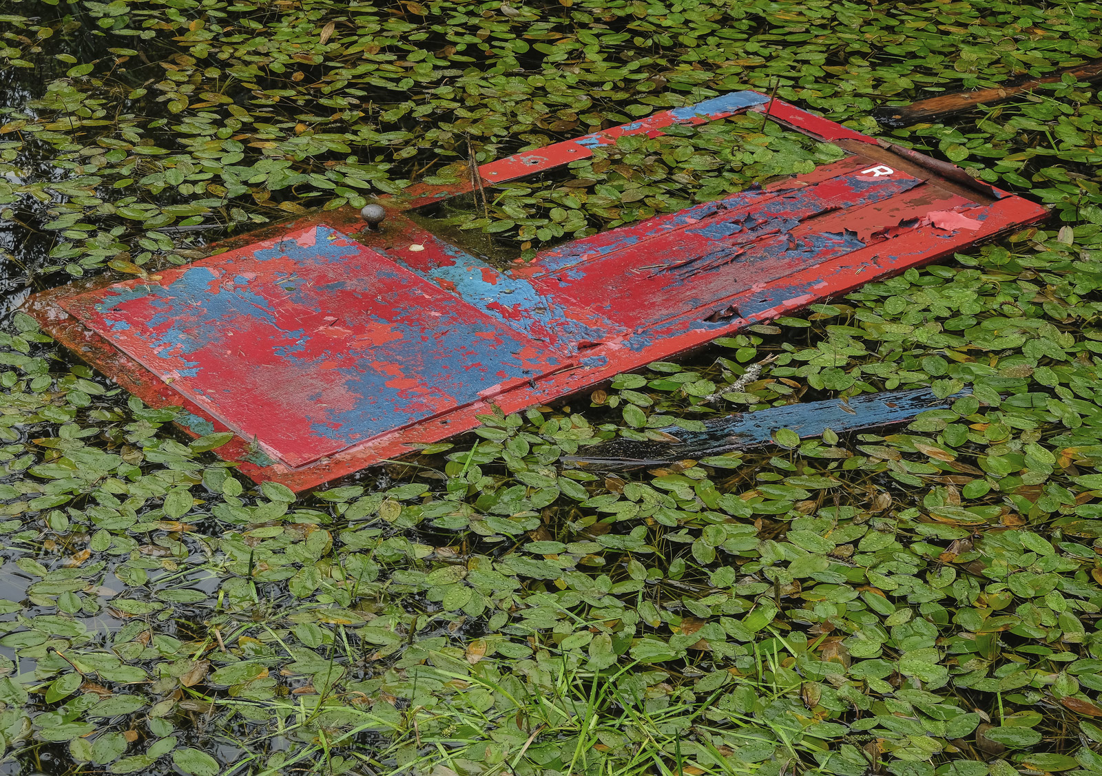 Shed Door, Blairs Loch, Moray, Scotland, discarded, door, boat, shed, red, blue, rhodedendron, leaves, green, colourful, photo