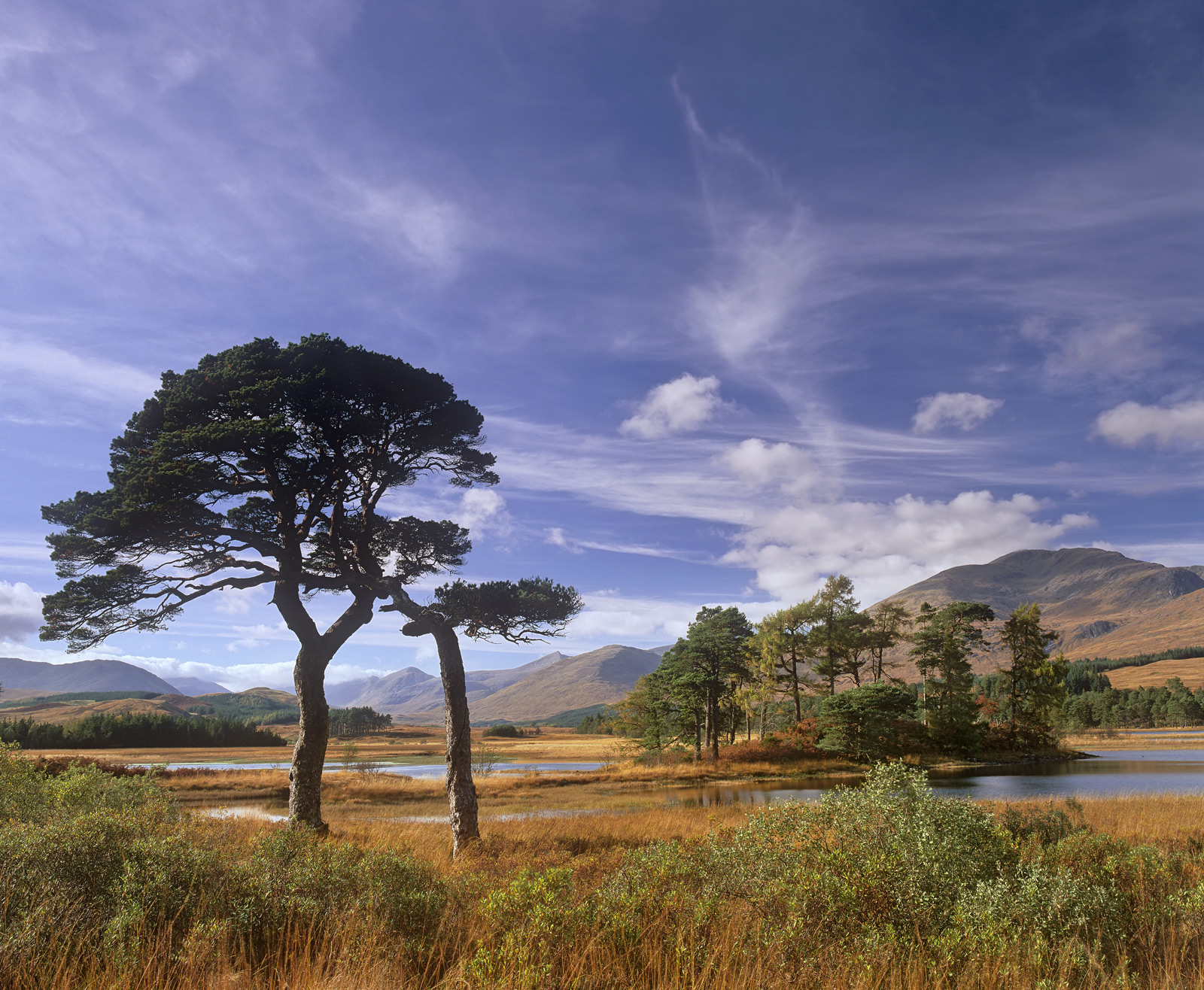 These two Scots Pines are quite literally bonded to each other, hence the title, they are quite inseperable and as a result must...
