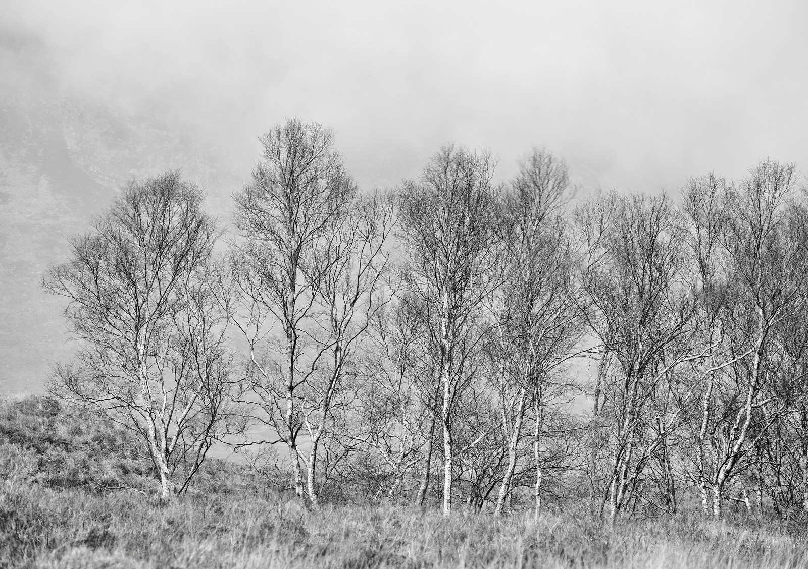 I thought this wee grove of spindly birch trees at the end of Glen Ettive looked spectacular aginst the mountain backdrop shrouded...