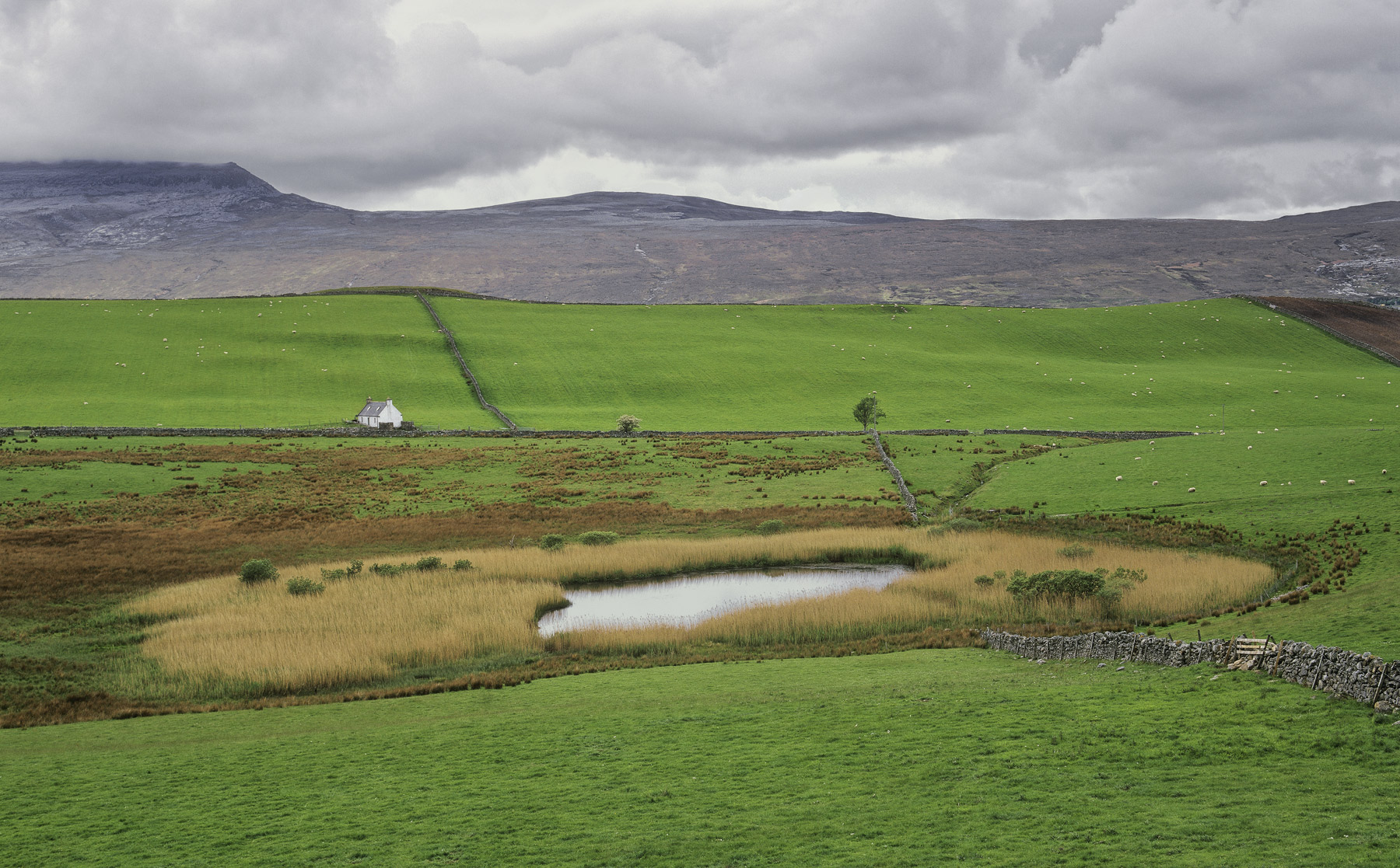 Sink Hole, Loch Eribol, Sutherland, Scotland, plug, hole, reeds, sheep, white, cottage, linear, graphic, green, grass, photo