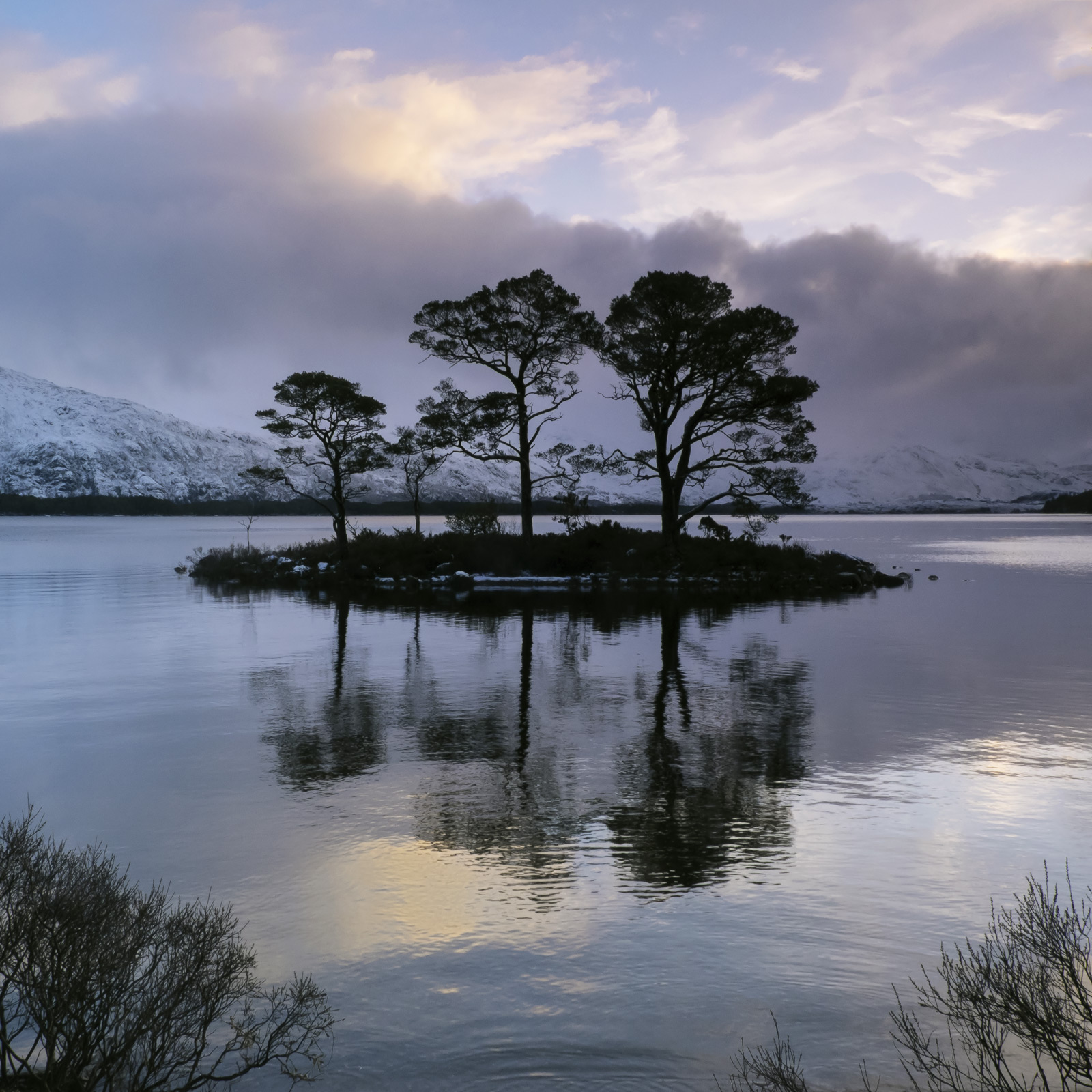 The island pines at Slattadale are perfectly positioned against the lofty Torridon mountain of Slioch some what subdued at present...