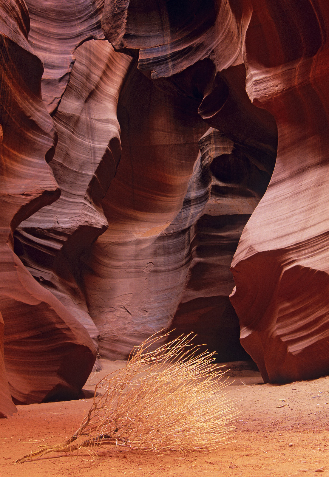 The beautiful sculpted corridors of twisted red sandstone are world famous. They are known as slot canyons. A narrow fissure...