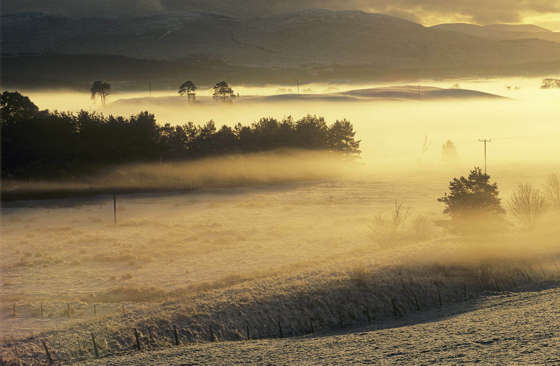 Golden backlit valley mist hangs wraith like above the river Spey near to Grantown. The fields beneath just visible through...
