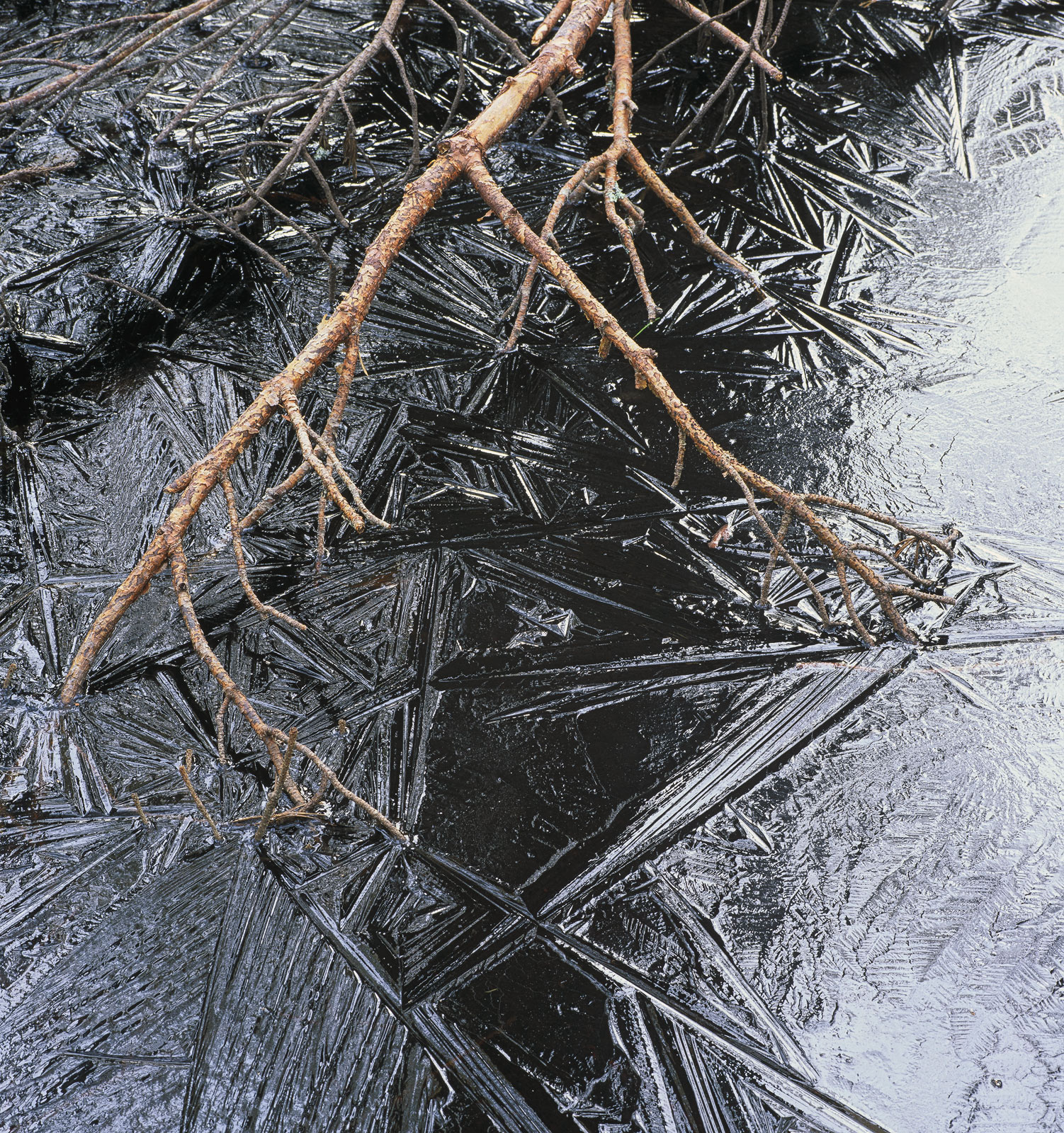 Spikey splinters of ice crack and puzzle the surface of a frozen black peat lochan at Loch Garten. I am often drawn to...