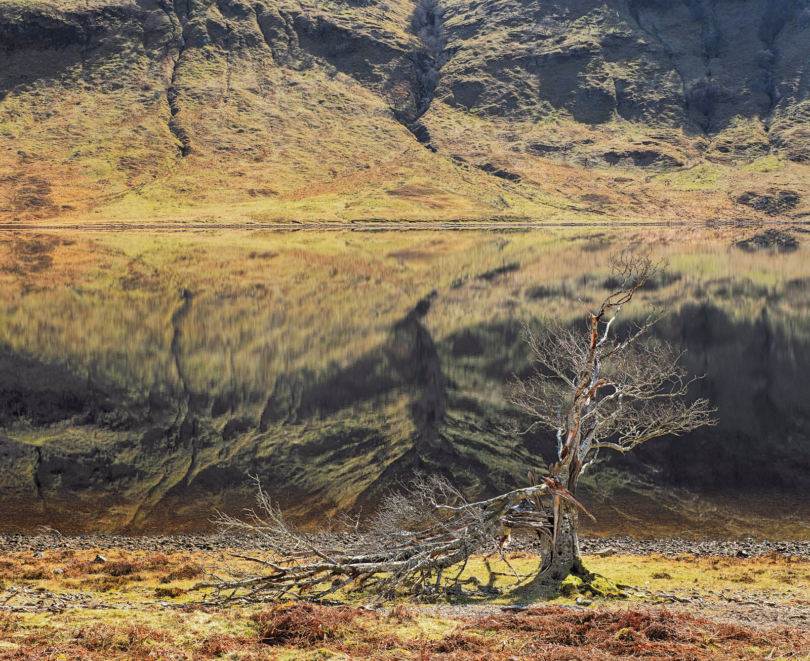 This old tree at the edge of Loch A Chroisg was said to have been struck by lightning but the damage is more likely to have been...