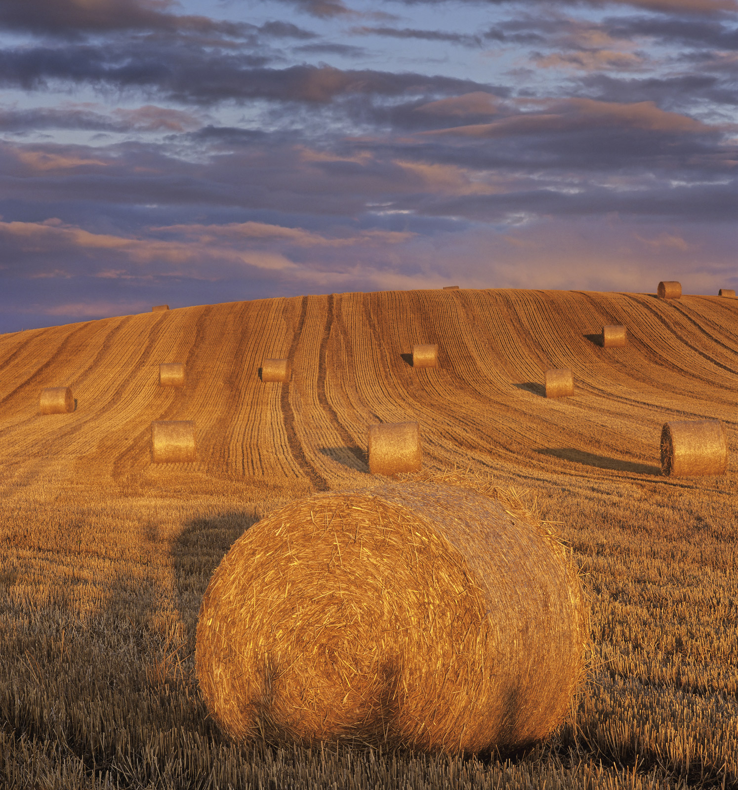 Straw Curlers, Forres, Moray, Scotland, bales, straw, oriented, slope, sunset, blush, stalk, shadow, fence, posts,  , photo
