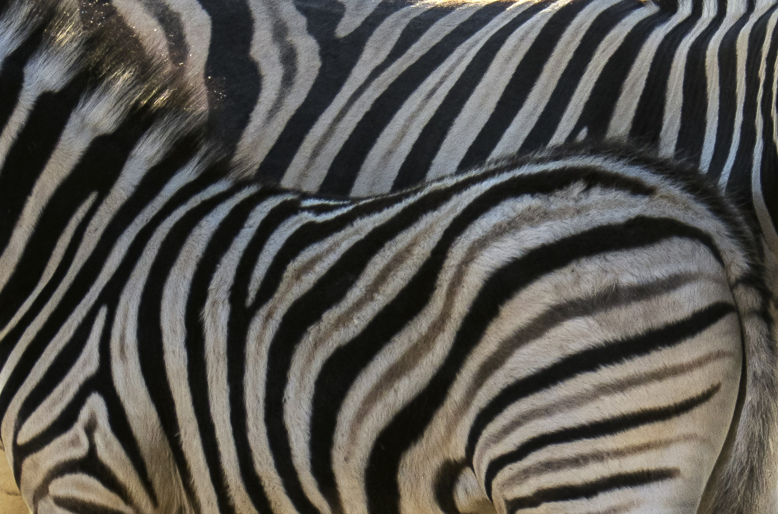 I think that the zebra ranked amongst my favourite of the animals in Etosha.  This was primarily due to their proximity enabling...