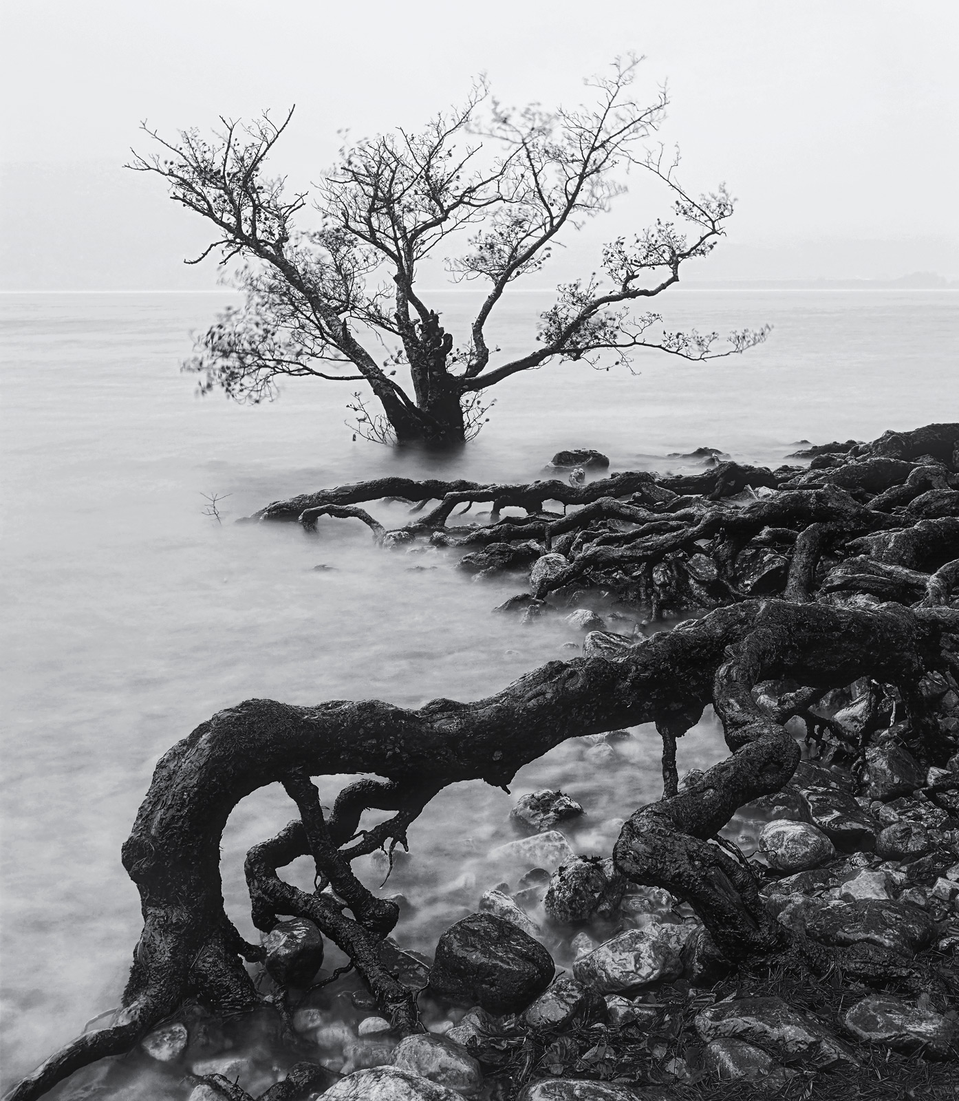 The creeping wet roots of some partially submerged scots pine trees reach out there sinister tendrils across the bleak waters...