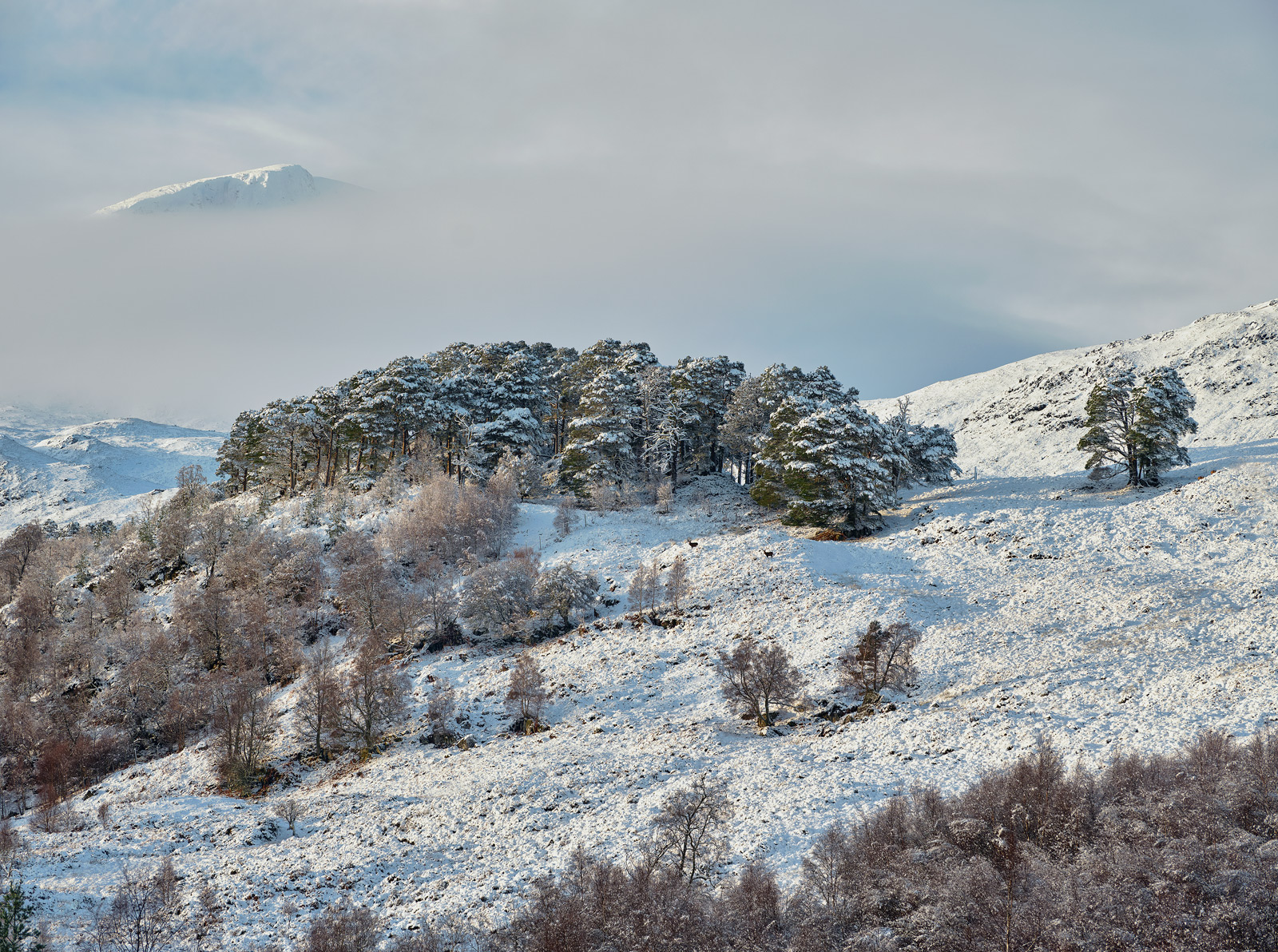 A typical scenic view of Glen Affric taken in the depths of winter with a fresh dump of snow in late afternoon sunlight is elevated...