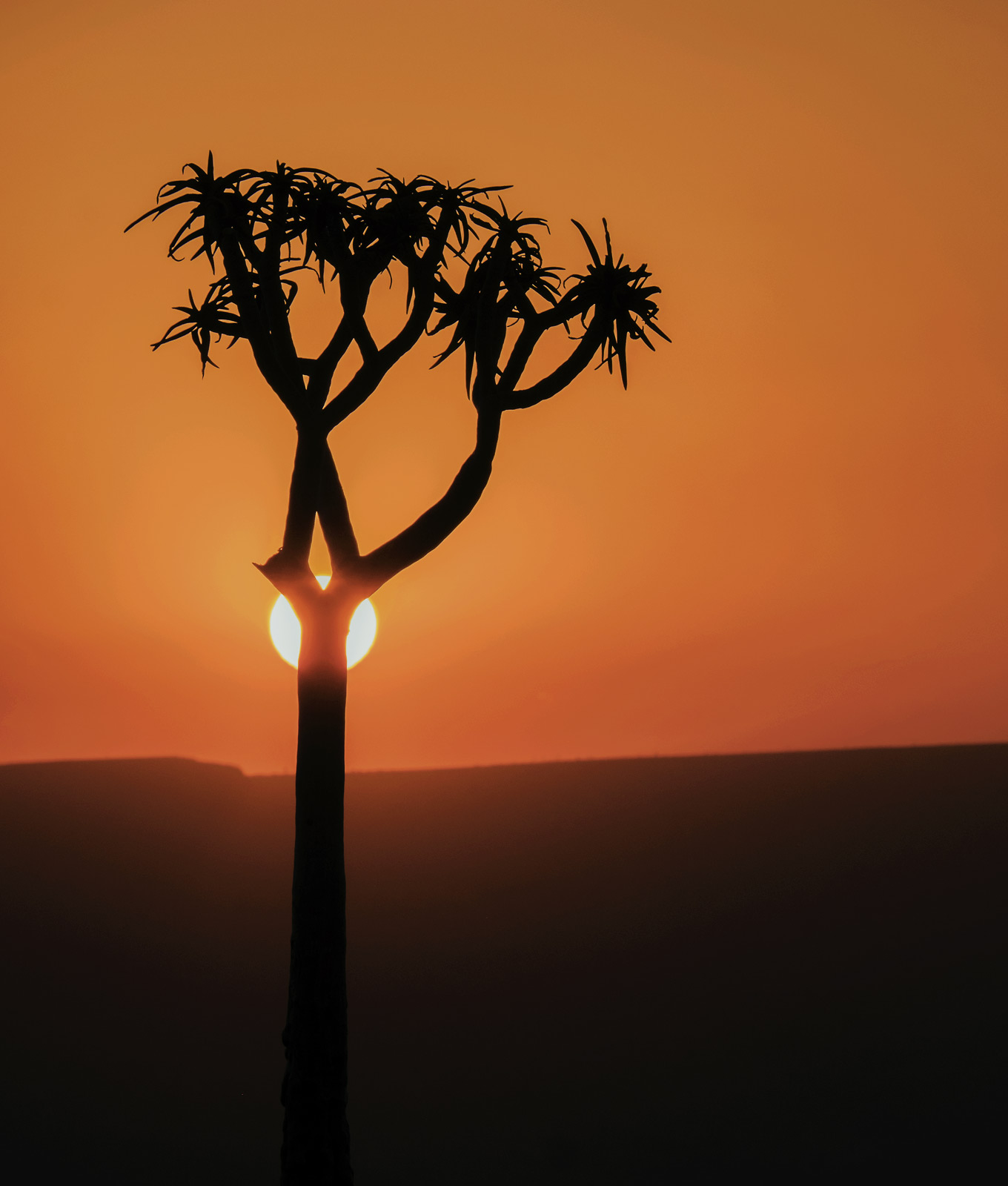 The silhouette shape of Namibia's fabulous quiver trees. There was only the one so I waited and aligned the setting sun...