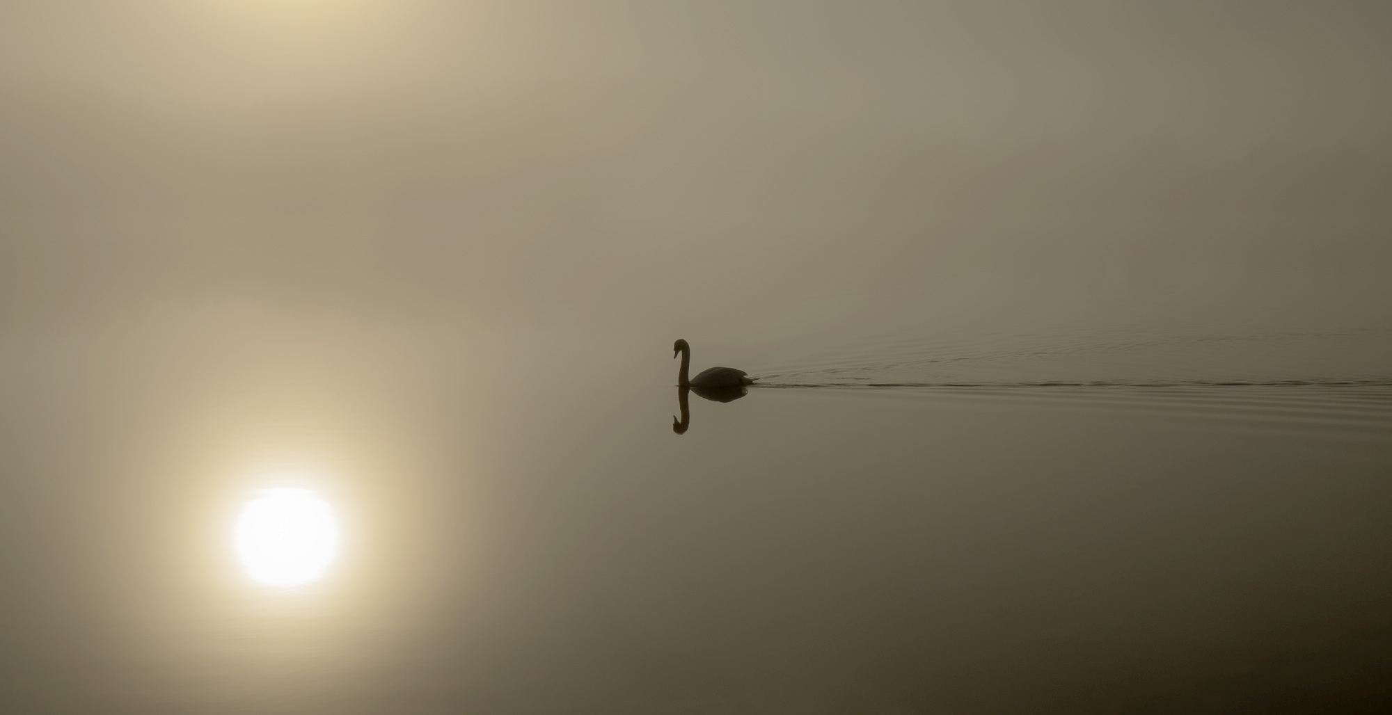 Swansong Rusky 2, Swansong Rusky 2, scene, beautiful, outline, trees, sun, backlit, mist, reflection, wake, swan, still , photo
