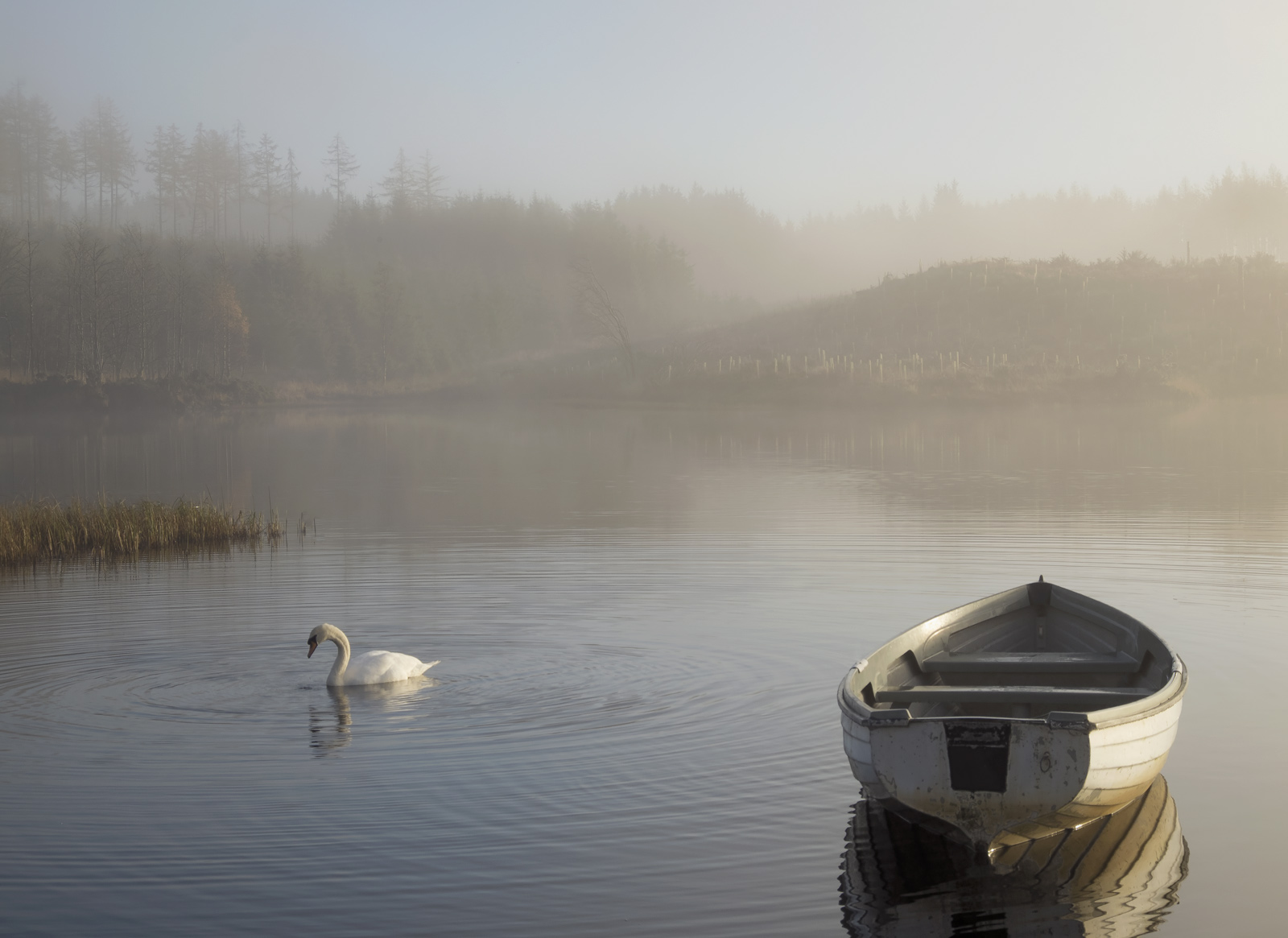 Swansong Rusky, Loch Rusky, Trossachs, Scotland, mist, perfect, evocative, autumnal, stunning, swan, serenely, glided, photo