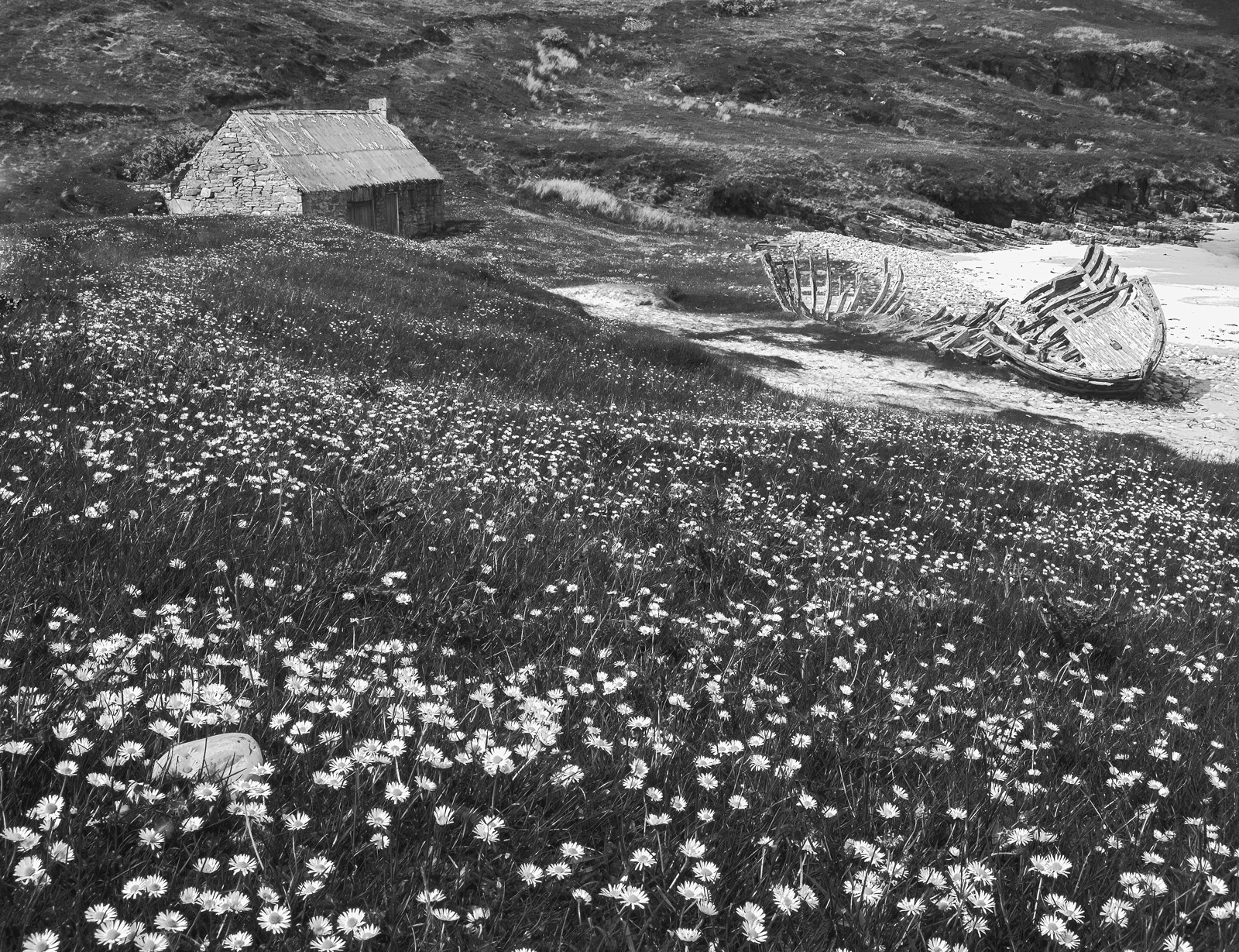Nodding white daisies growing in an endless blizzard of summer flowers roll over the grassy slopes down to the shore of gorgeous...