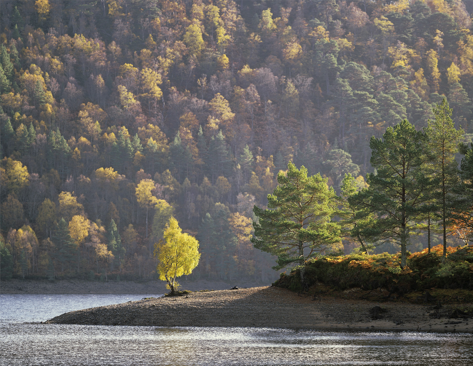 Technicolour Dreamcoat, Glen Affric, Highlands, Scotland, centre stage, shrouded, gold, leaf, birch, scots pine, green , photo