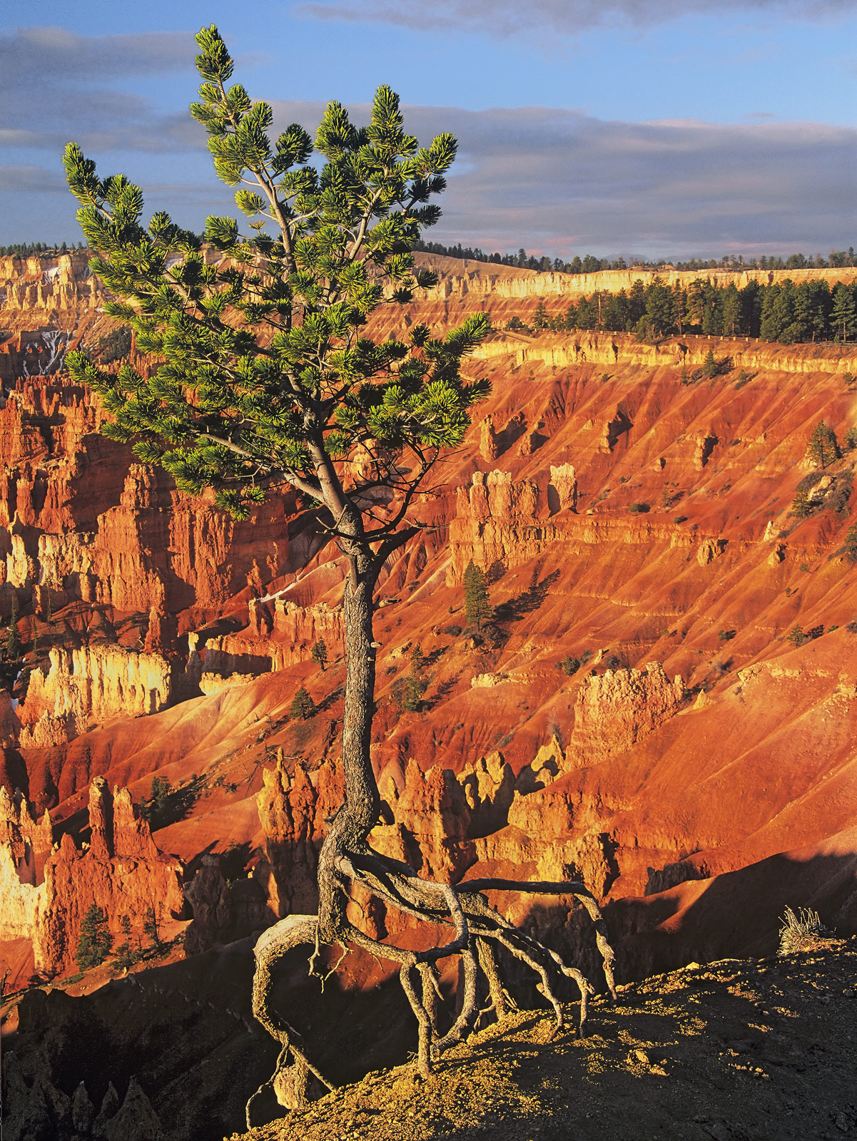 Bryce canyon was my favourite National park I have never seen such an awe inspiring landscape on such a vast scale. The...