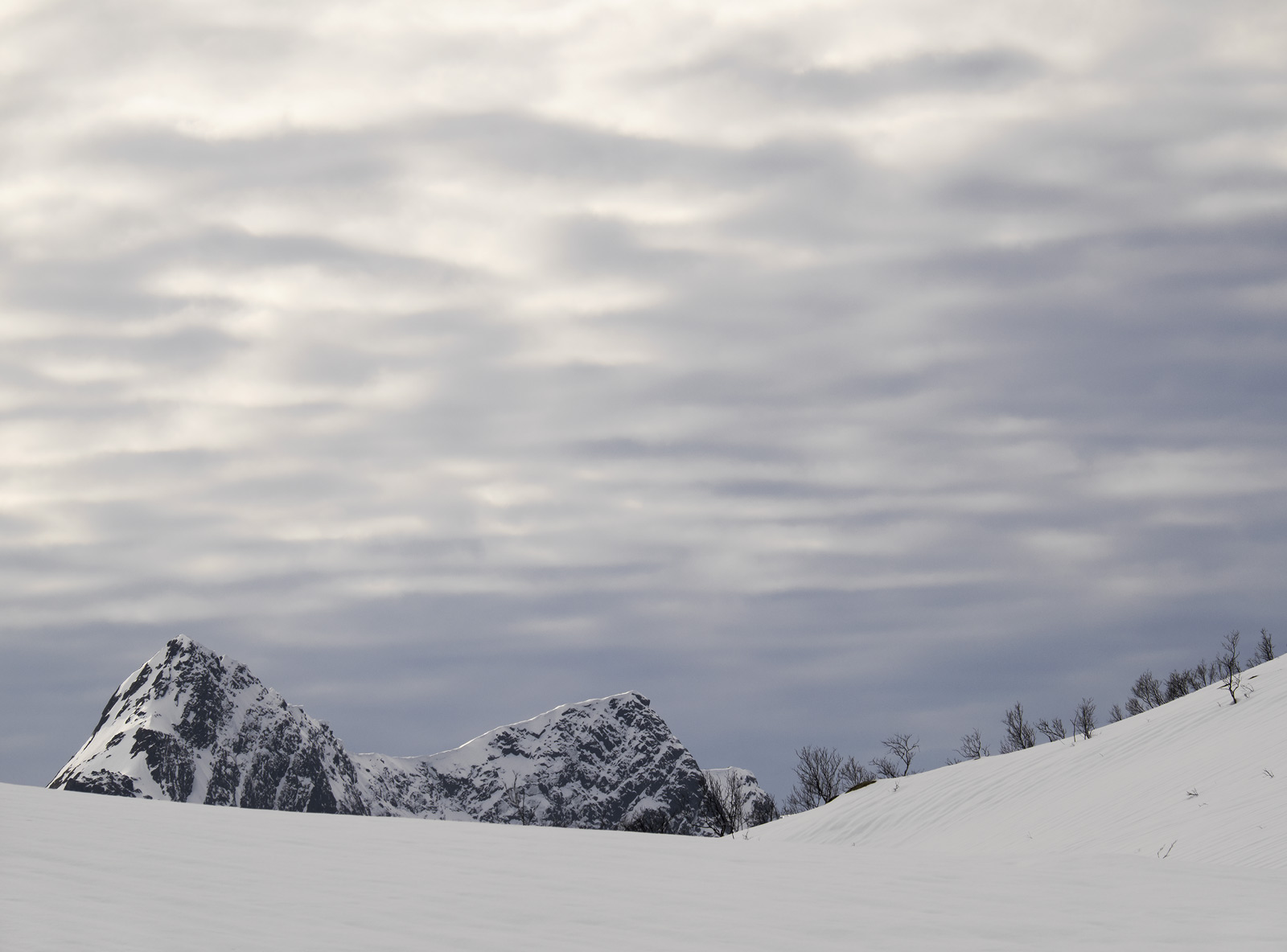 The Cats Back, Bergsbotn, Senja, Norway, distant, mountains, brush, trees, snow, concealed, fur, ears, cloudy, layered, , photo