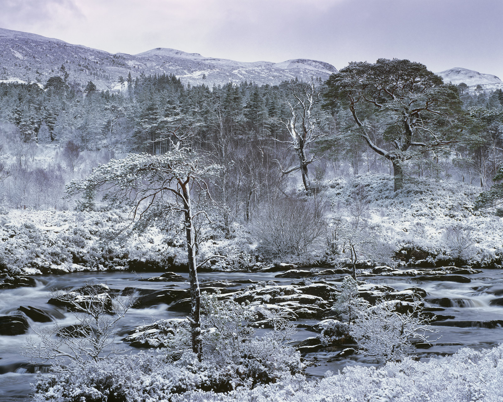 There are a few important Scottish plantations that still have their native trees and Torridon has amongst the finest Scots Pine...