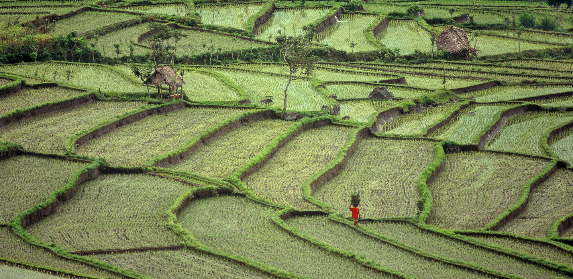 I have had the good fortune to see the rice terraces of Nepal and the onion field terraces of the Dieng Plateau. It was...