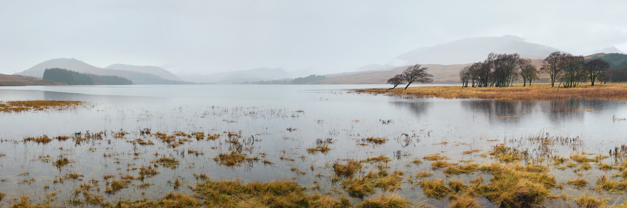 Tulla Mist Pano, Loch Tulla, Bridge of Orchy, Scotland, wind, scuplted, trees, submerged, surrounded, water, mist, white, photo