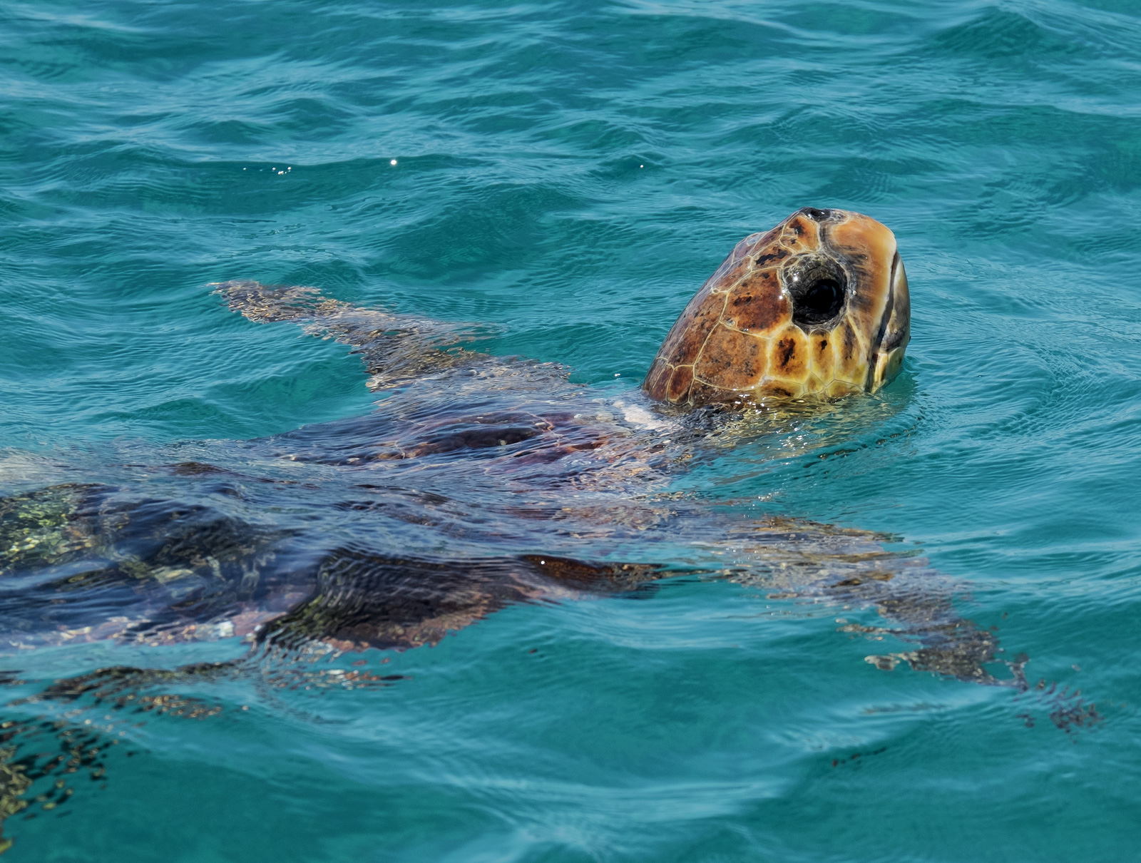 One of the days we were on the Greek island of Zakynthos my family boarded a boat to go in search of turtles and to snorkel in...