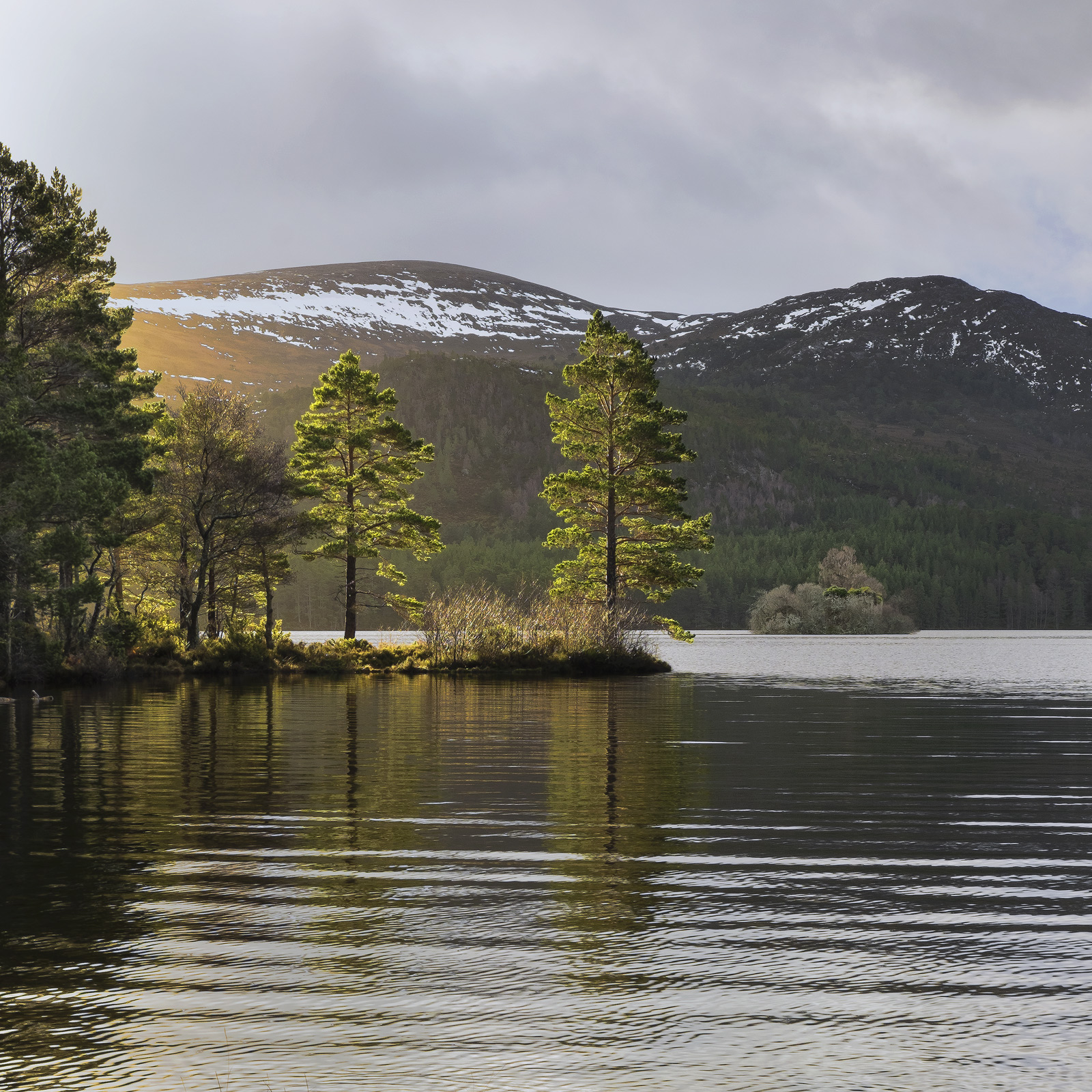 This classic location at Lochan Eilean exploits the two scots pine trees at the end of a slice of land that juts out into the...