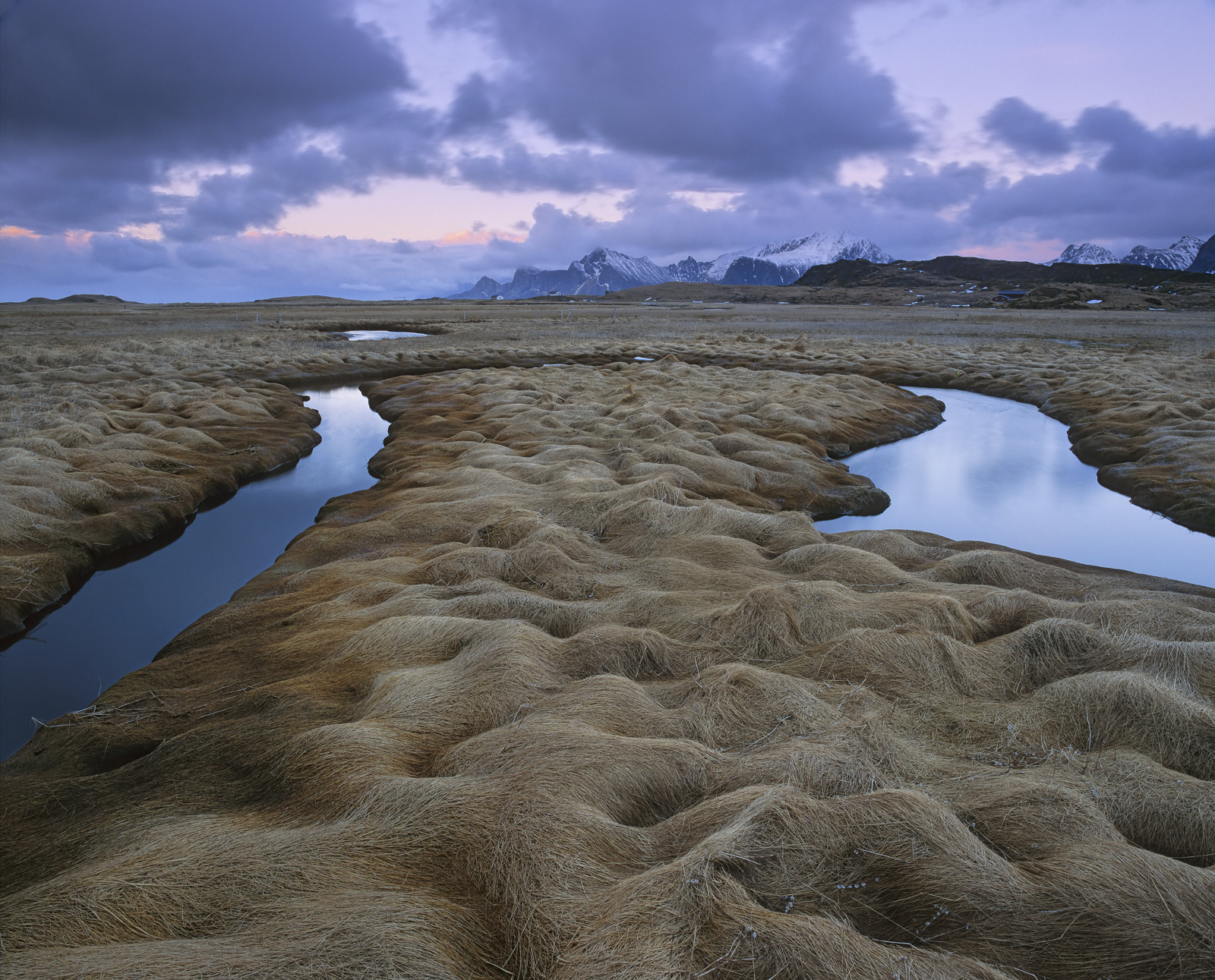 A loop of salt water part of a meandering tidal stream sits in matted snow flattened grasses which have the texture of matted...