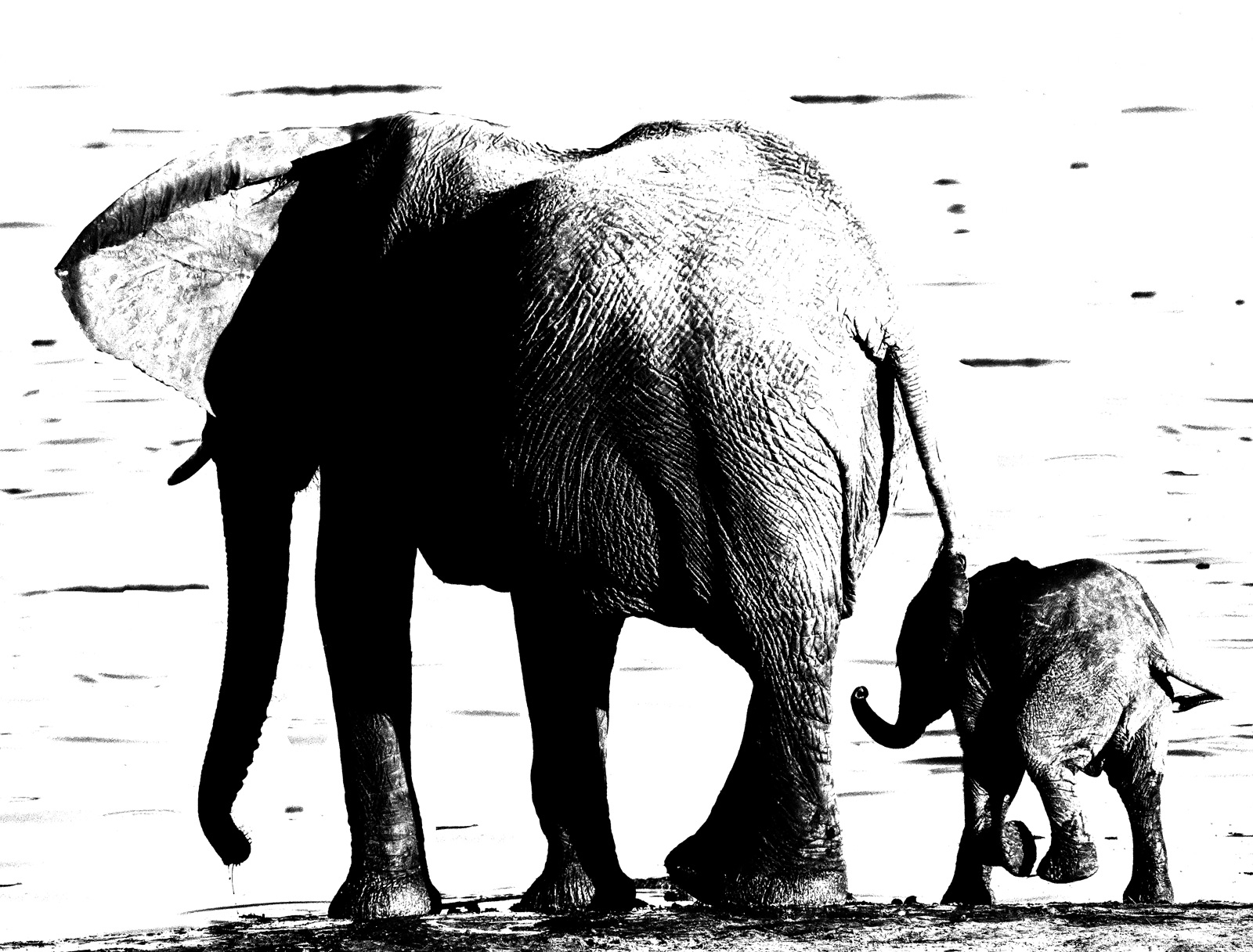 Water Hole, Hwange, Zimbabwe, Africa, adore, elephants, favorite, mother, son, watering hole, youngster, excited, pen and ink, jet black, pure white, photo