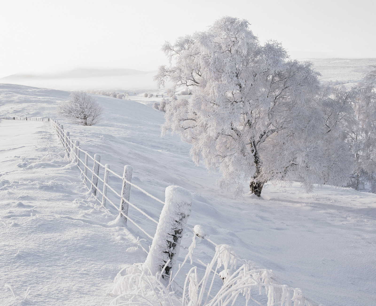 A gorgeous pristine snow scene featuring the many shades of white that sunrise on Dava moor generates. Direct light provides...