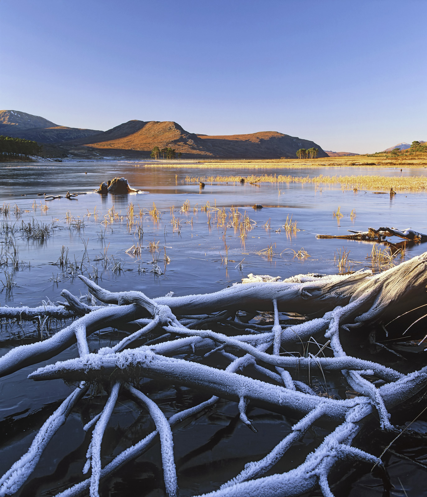 The bones of old rotting tree roots that once lined the edges of Loch Droma project from the frozen surface of Loch Droma.&nbsp...