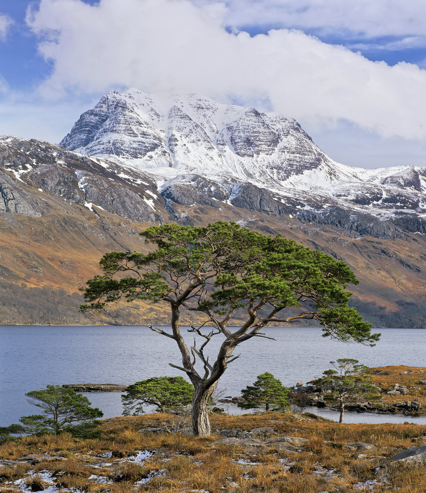 The umbrella canopy of a gorgeous scots pine tree mimics the crown of the snow dusted molar that is Slioch an inaccessible Munro...
