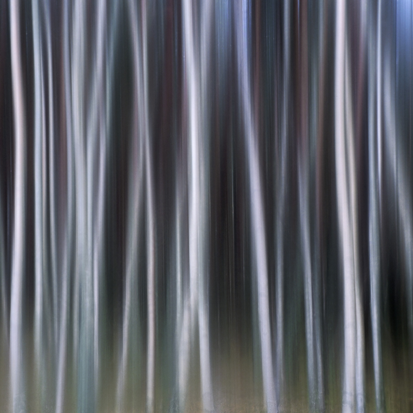 Although very similar to another version of this woodland this one is cropped square and is entirely surreal. The woodland...
